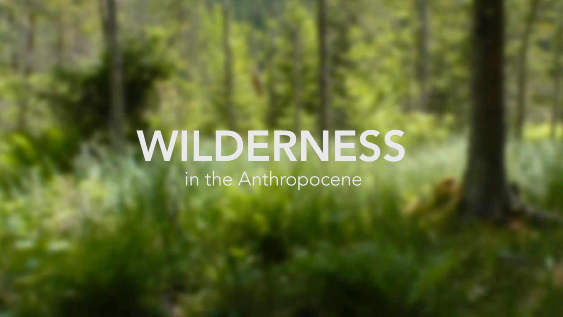 WILDERNESS-Maxlackner.016.jpeg