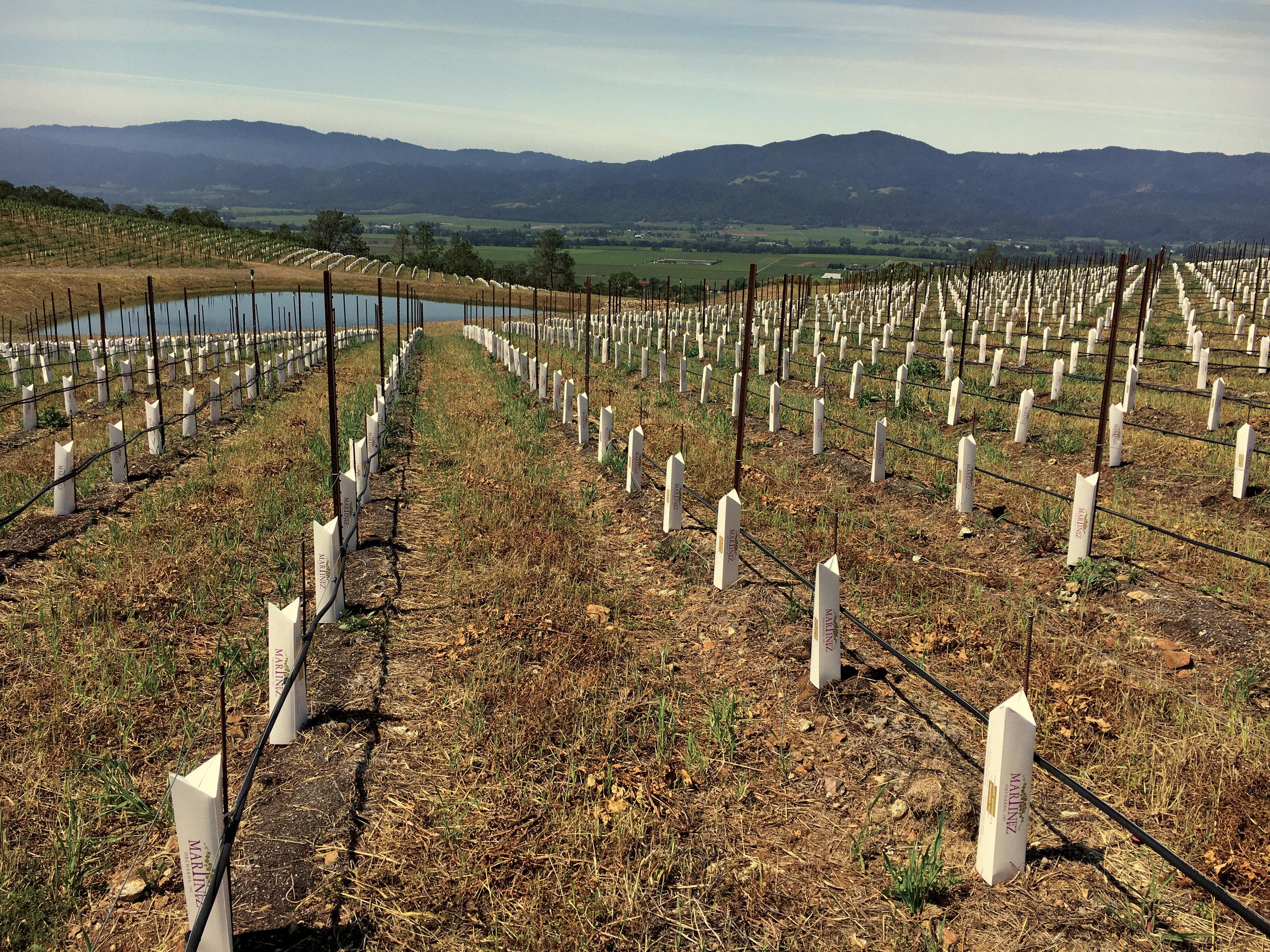 Planted_Vineyard.jpg