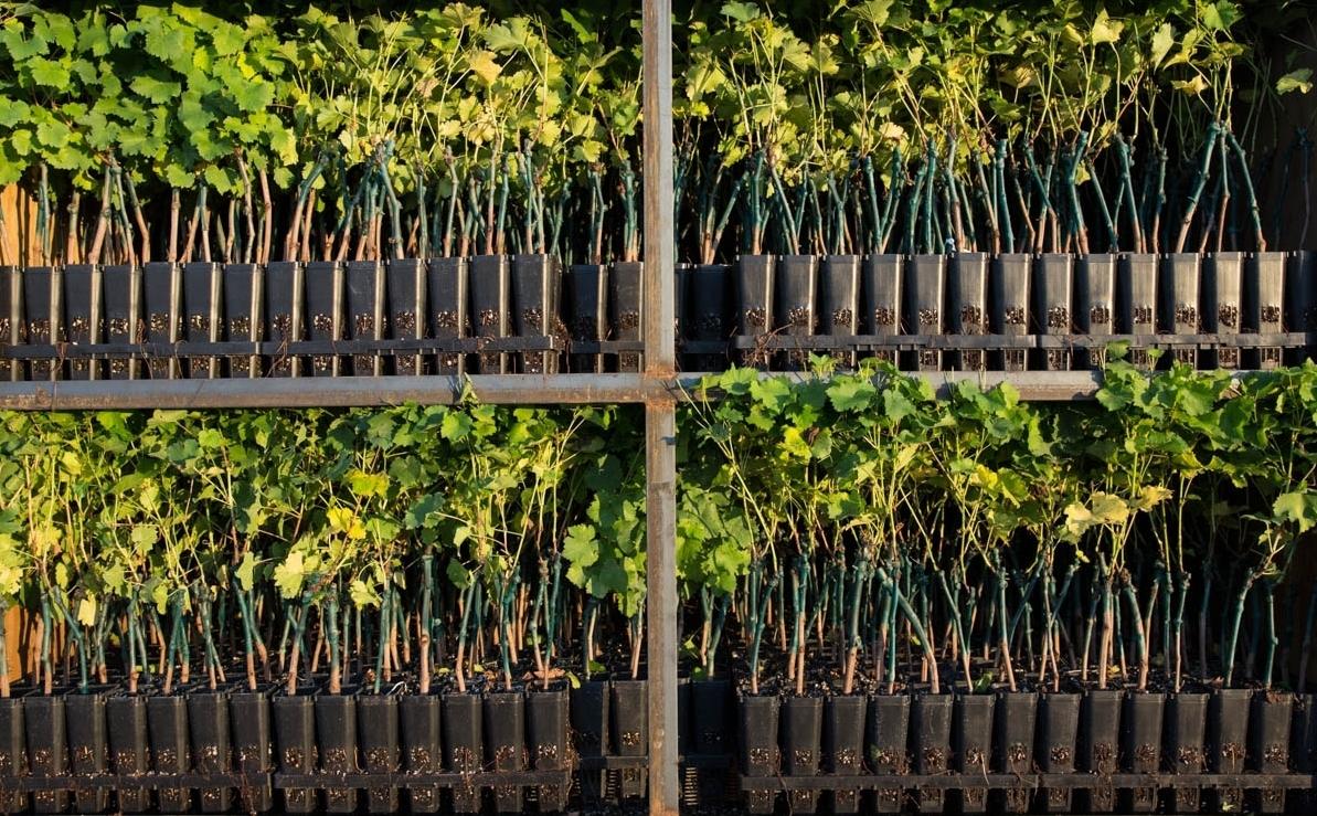 Martinez Orchards Inc