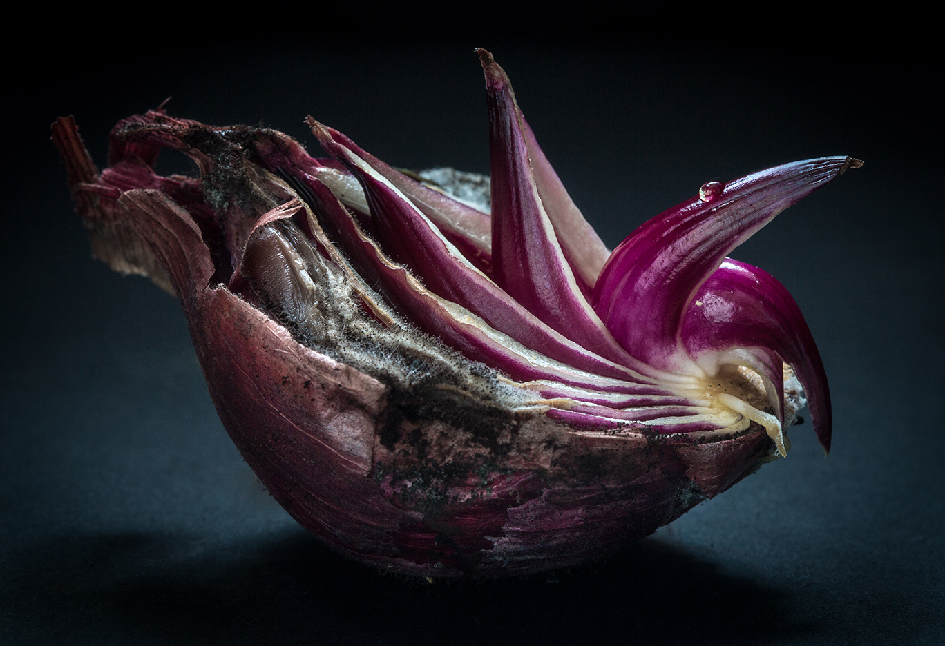 Kim Van Liefferinge   Columbian Exchange Onion  Photography 19 x 13
