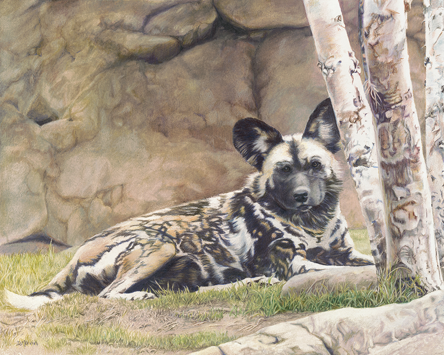 "Debra Marvin - Honorable MentionWorking in a wide range of media—oil, acrylic, watercolor, colored pencil, and pencil—professional artist Debra J. Marvin creates wildlife art and related landscape studies. She also continues to do pet portraits and other pieces on commission. Deb enjoys participating in juried art competitions and has won several awards. Recently, her painting ""African Painted Dog I"" won a Second Place Award in the 2017 Annual Member Exhibition of the Cincinnati Chapter of the Colored Pencil Society of America, and two of her paintings were singled out for distinction in the 2017 Richeson75 Animals, Birds, and Wildlife Exhibition. Additionally, Color Magazine selected one of Deb's paintings to be included in a book, Colored Pencil Treasures V. Deb, who lives in Northern Kentucky with her husband, hopes her art serves as a bridge helping people to reconnect with the beauty of nature and the desire to be good stewards of the earth.www.djmarvinart.com"