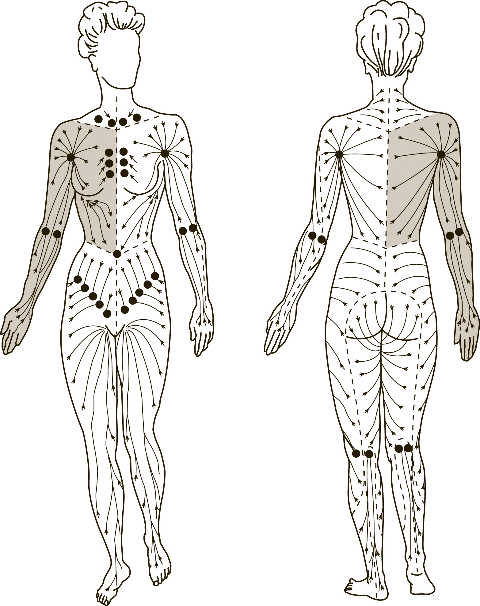 Lymphatic System illustration (50's chick)1_22_18(#4).jpg