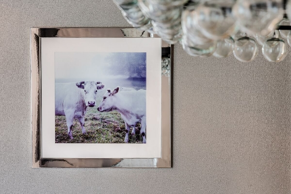 A look at our guiding inspiration… cows!