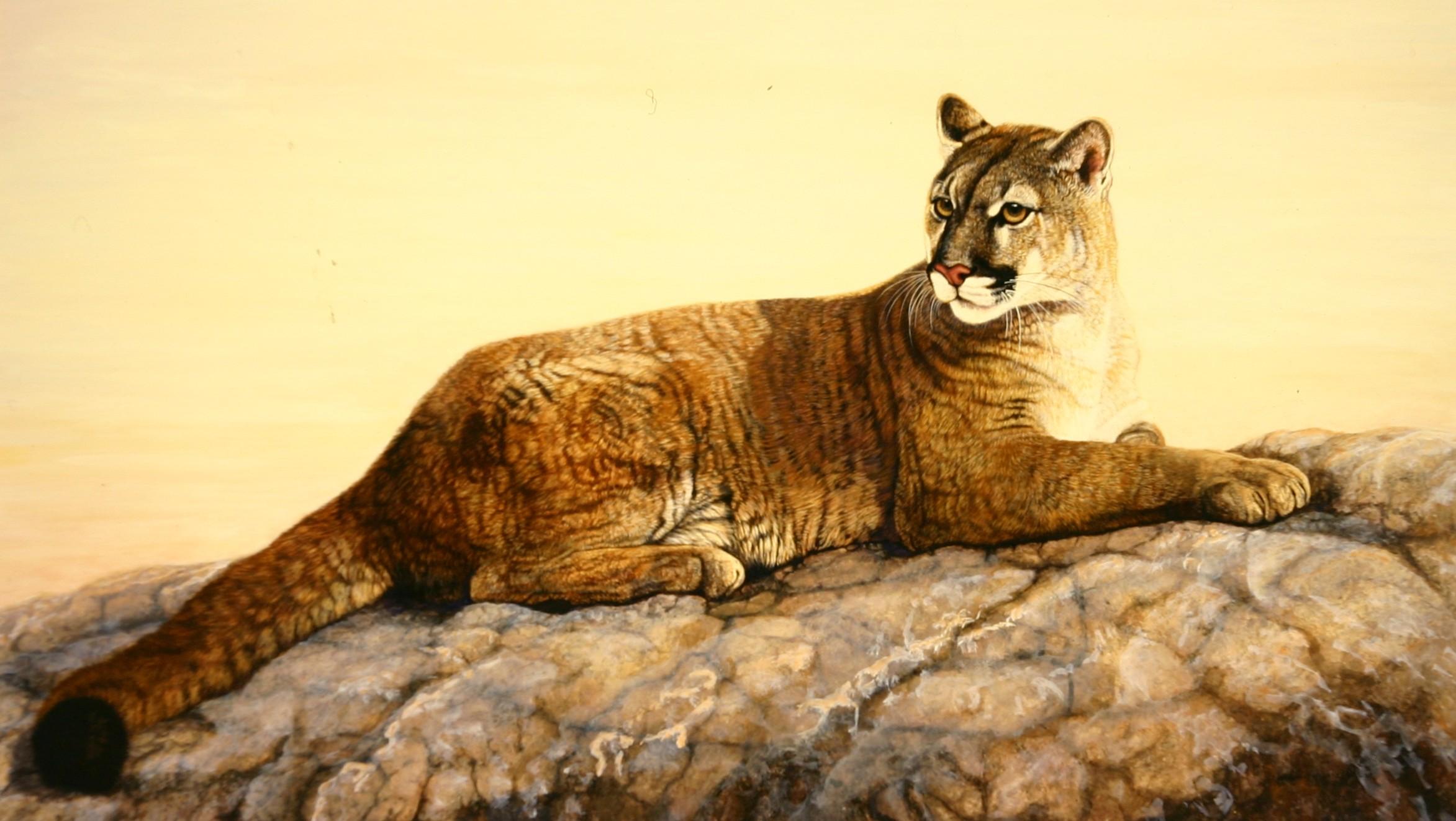 Cougar rock.jpg
