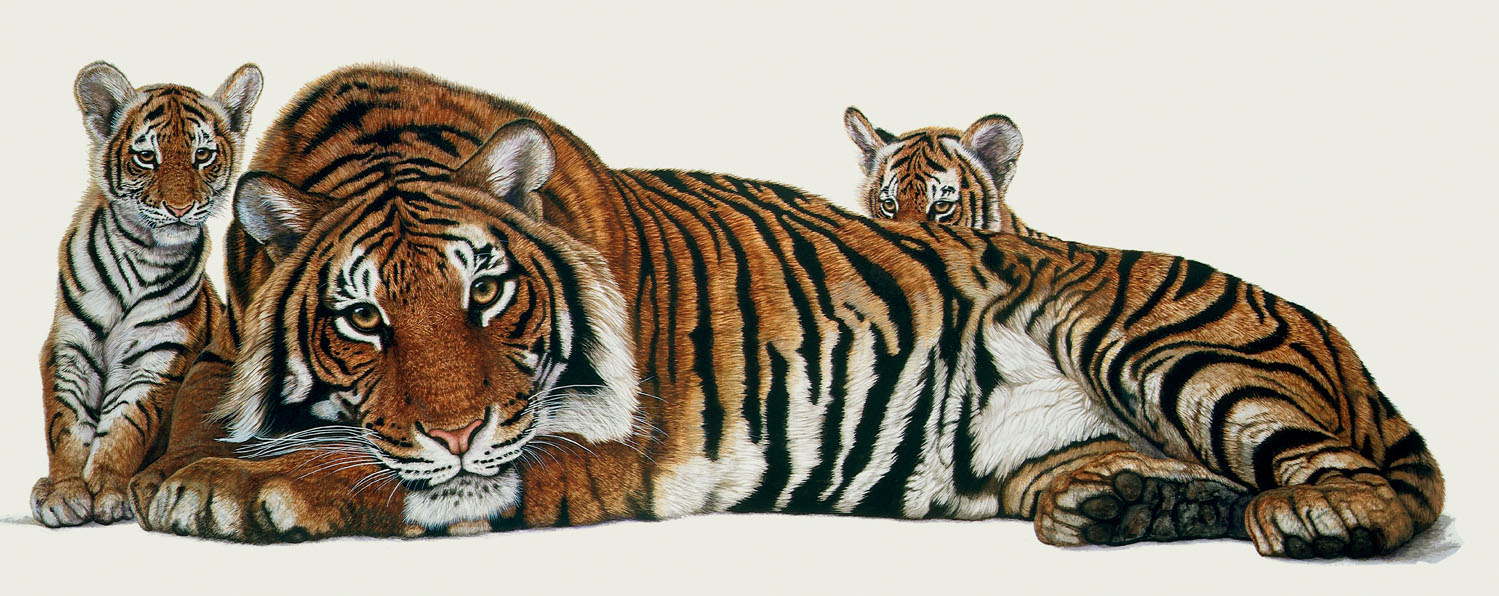 Sumatran Tiger Family20180130.jpg