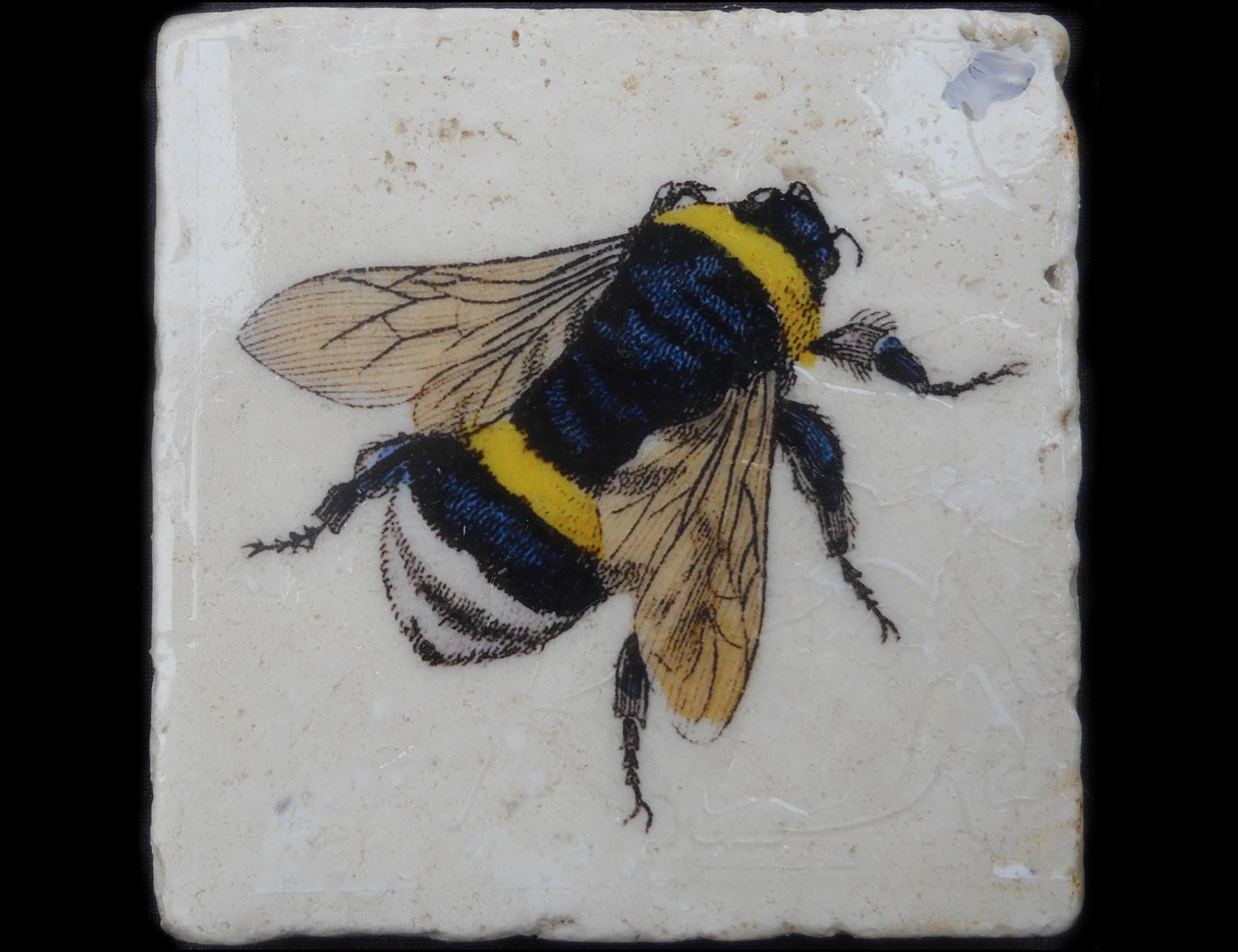 Black Bee.jpg