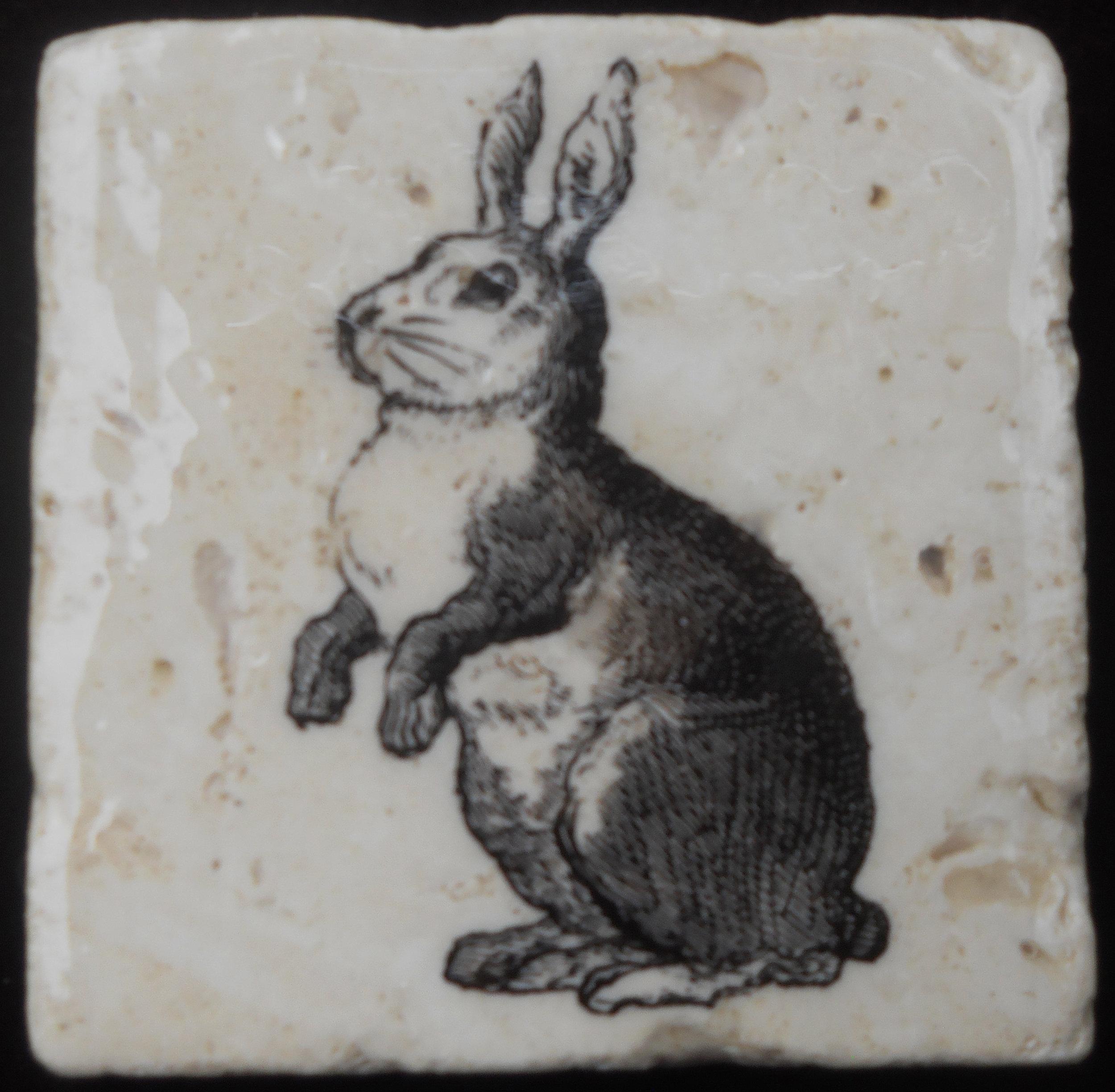 BW Bunny.JPG