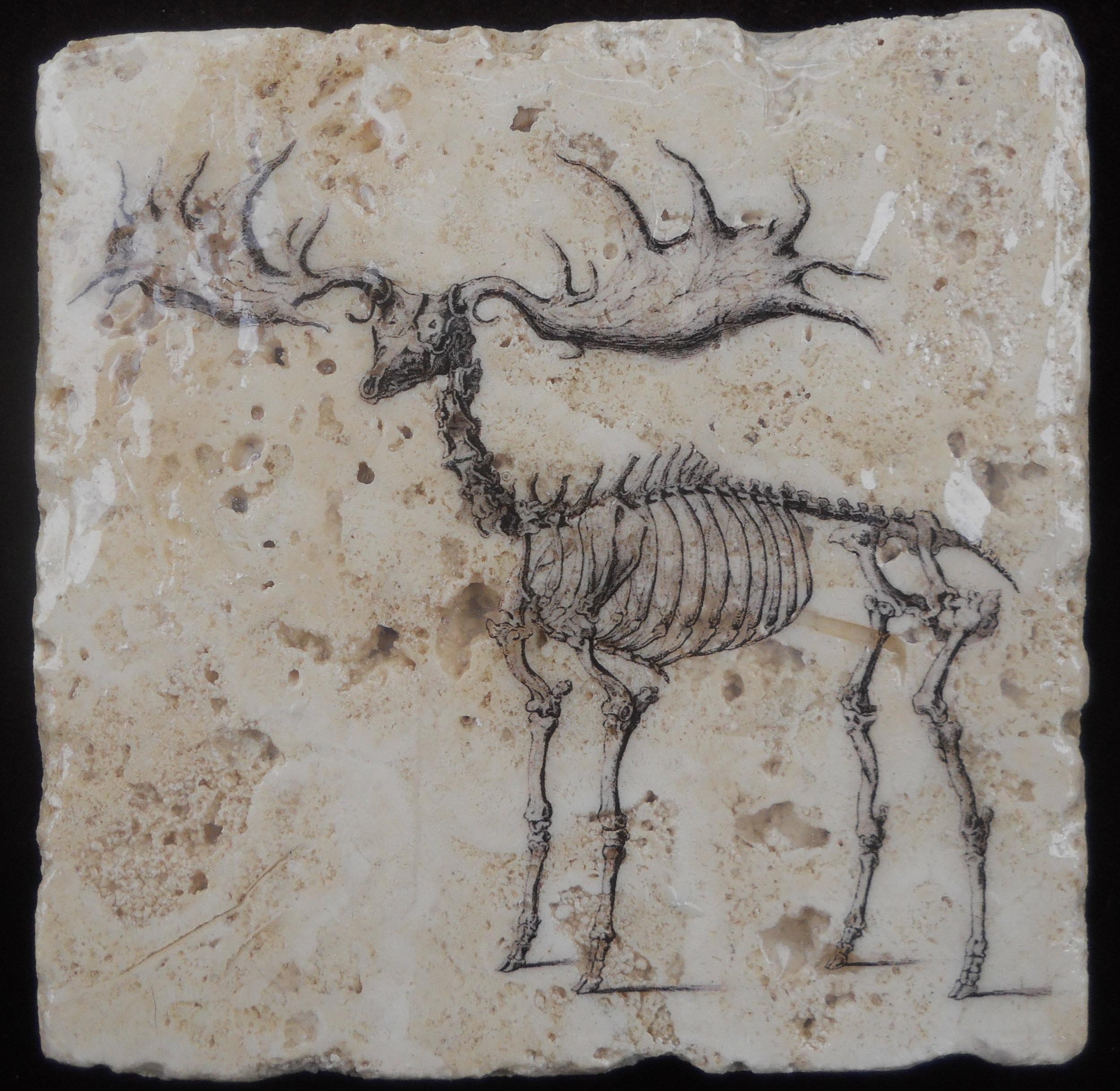 Elk Skeleton.JPG