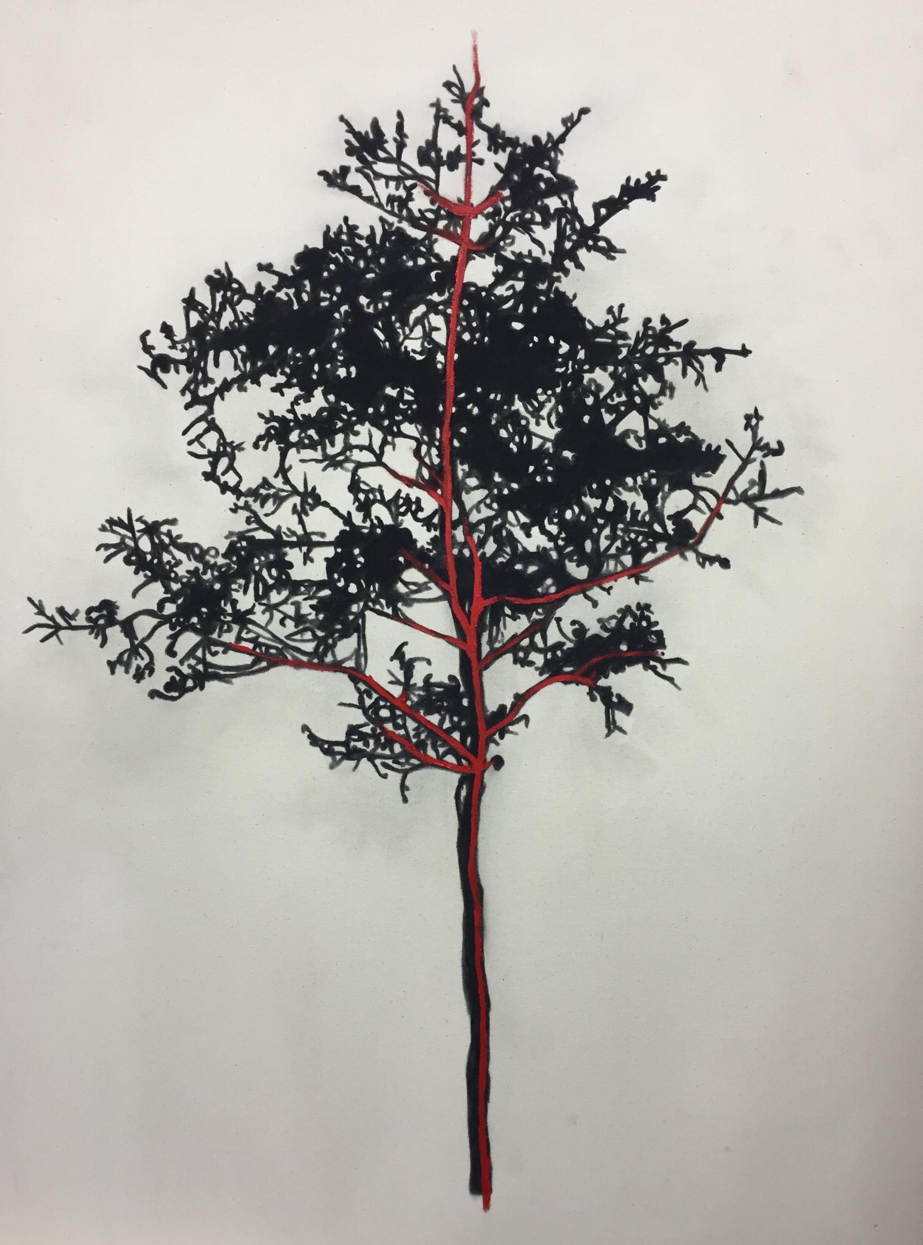 Étude pour arbre , 2015.Huile et fusain sur toile. 48 x 36 pouces.