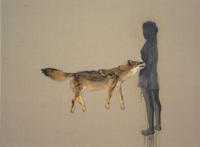 Roadkill coyote.