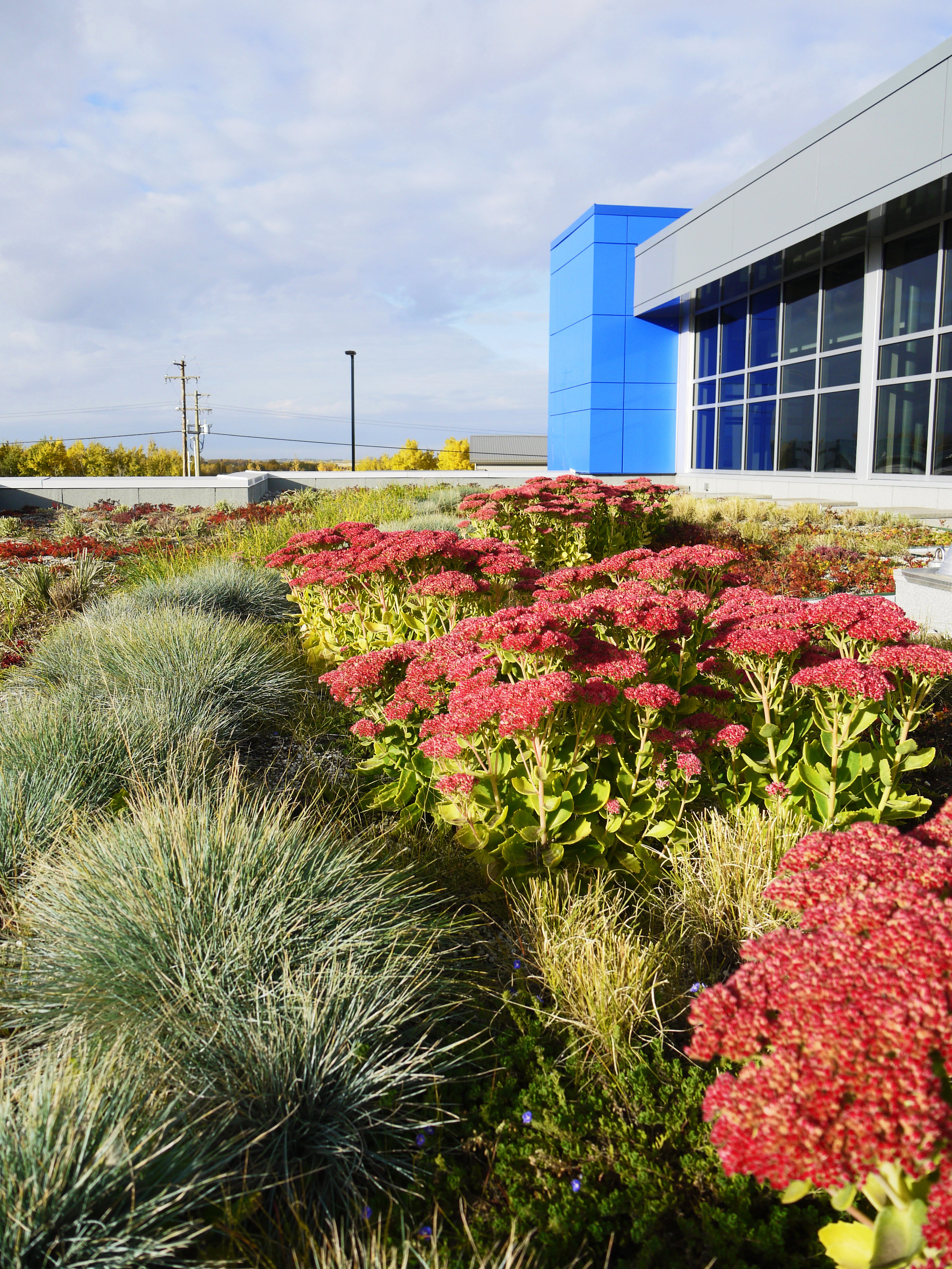 ATCO Green Roof