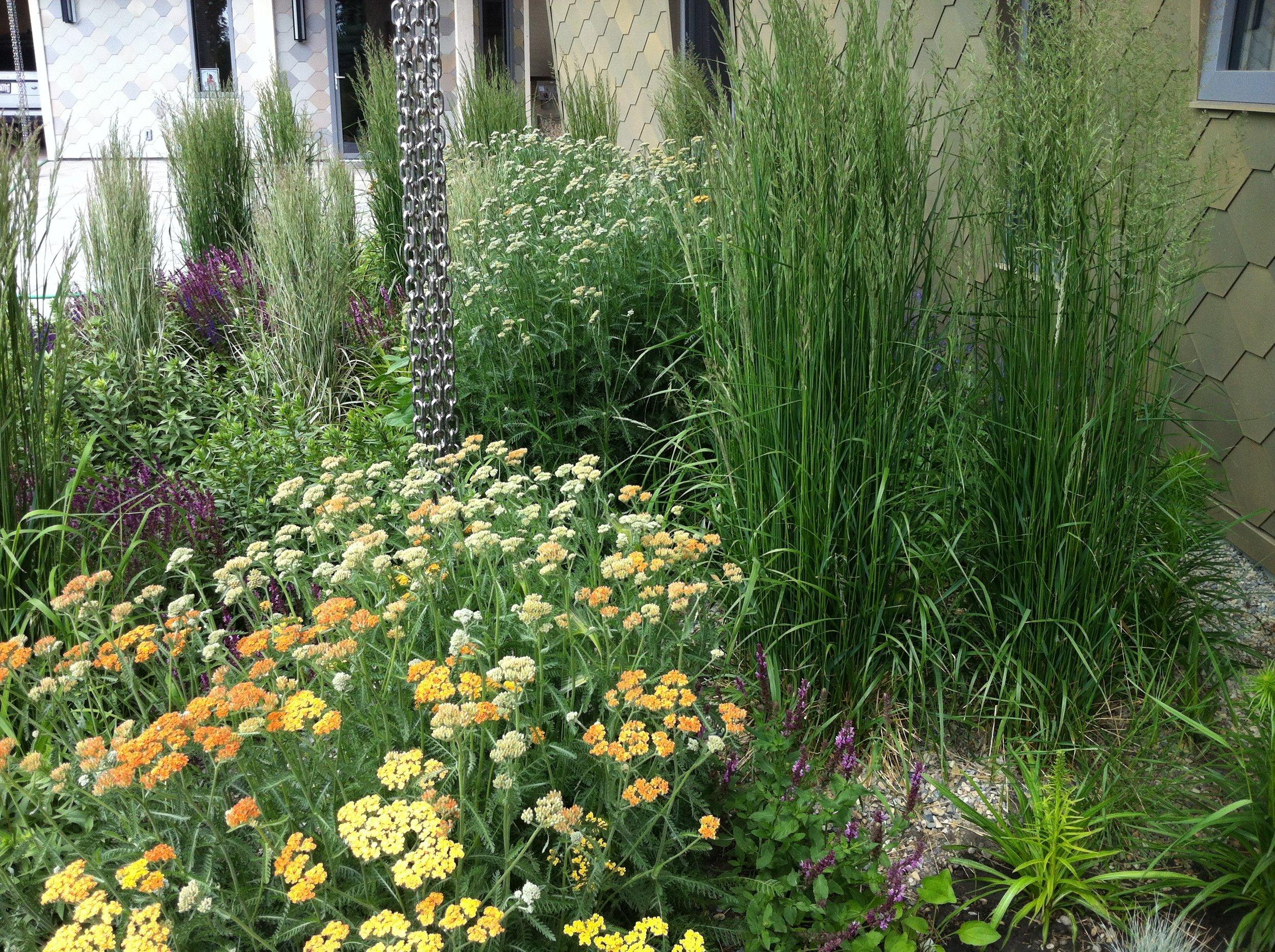 Hygge-pollinator garden1.jpg