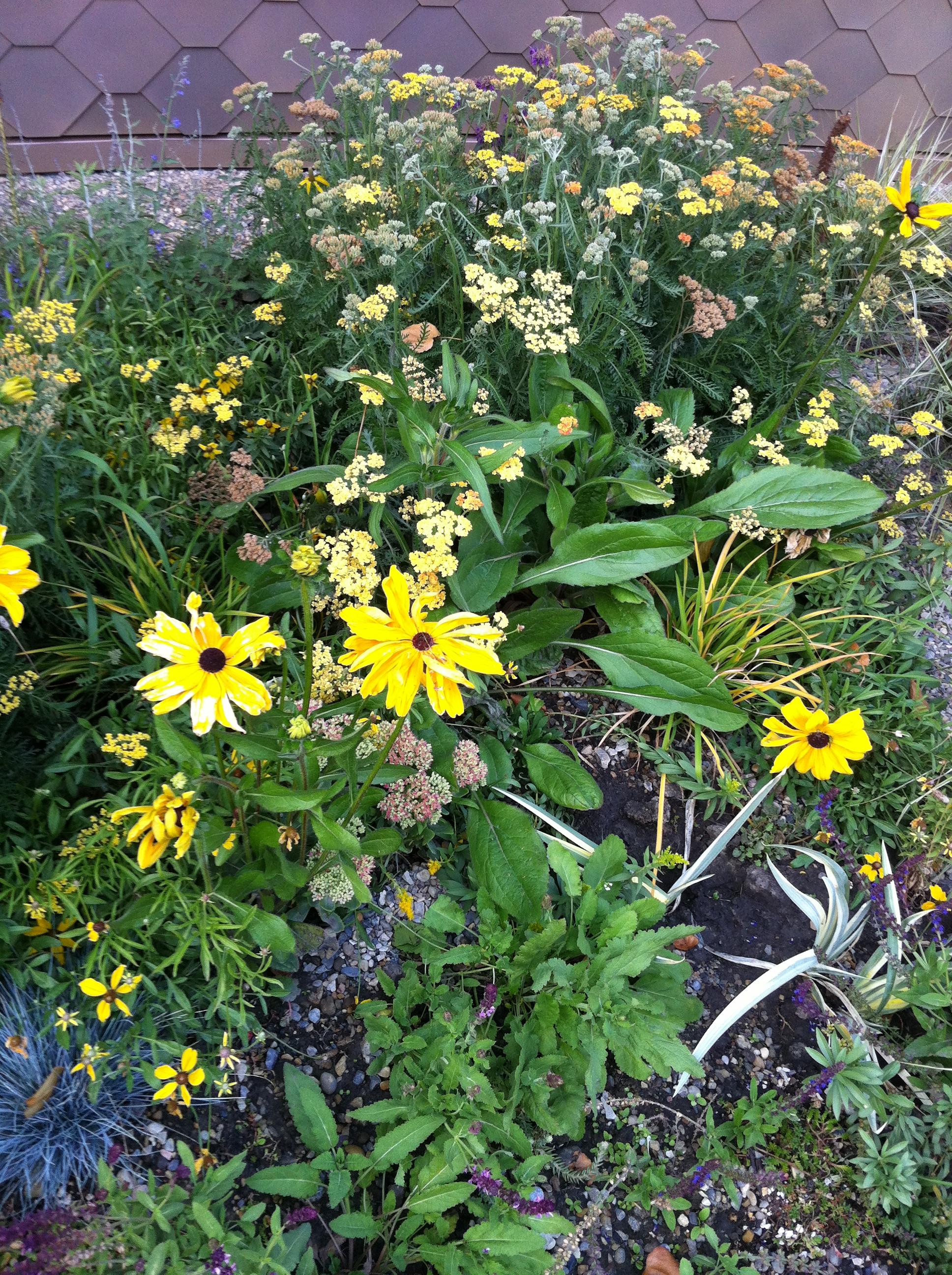 Pollinator garden_Hygge2.JPG