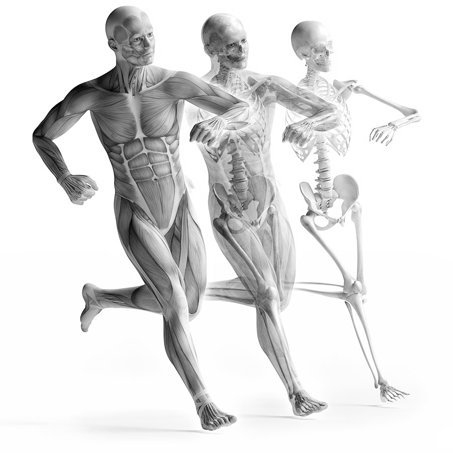 Fascia & Self Massage - Learn about myofascial trigger points and different techniques to release them.