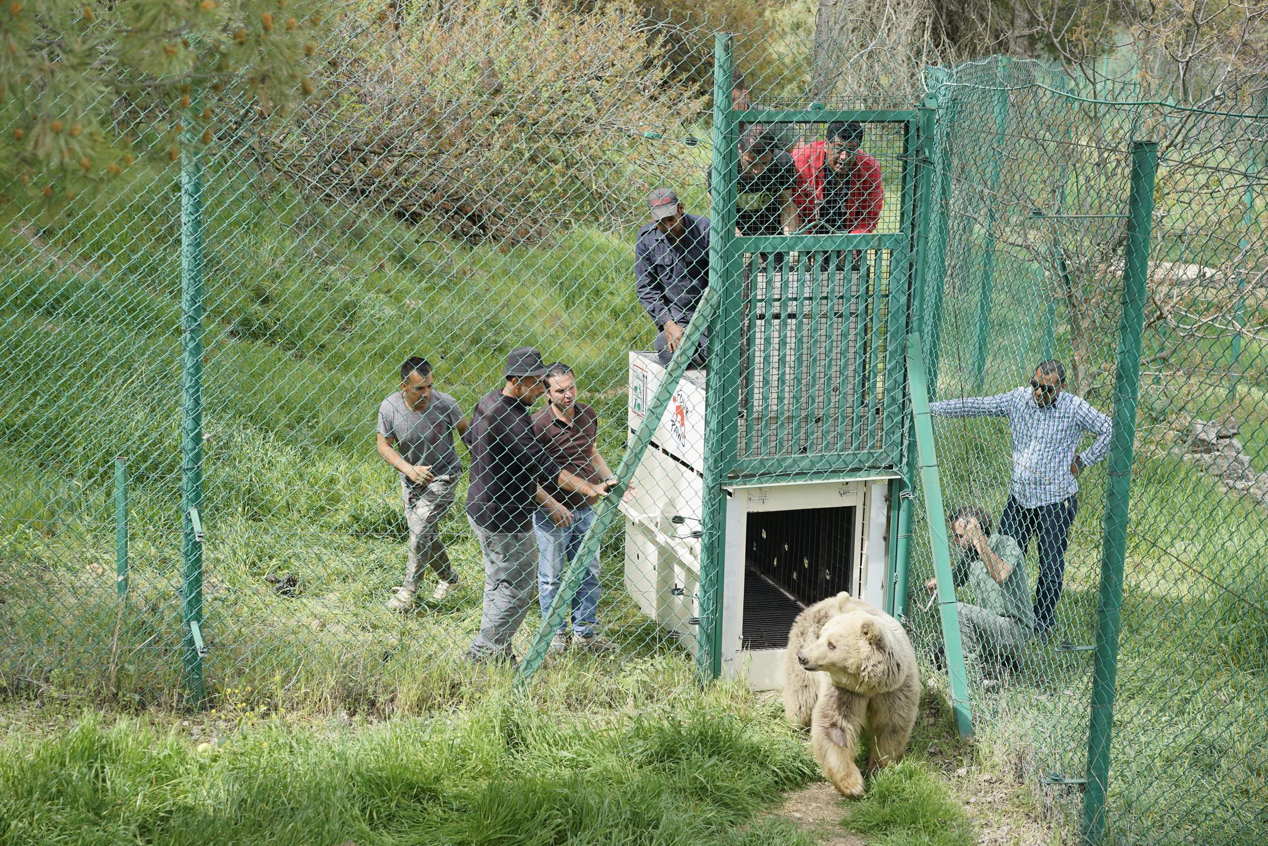 Lula being released into her new home in Jordan. Photo by Four Paws.