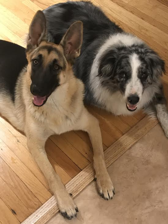 TWO OF MY ESTEEMED OFFICE MATES, LUNA AND FINN.