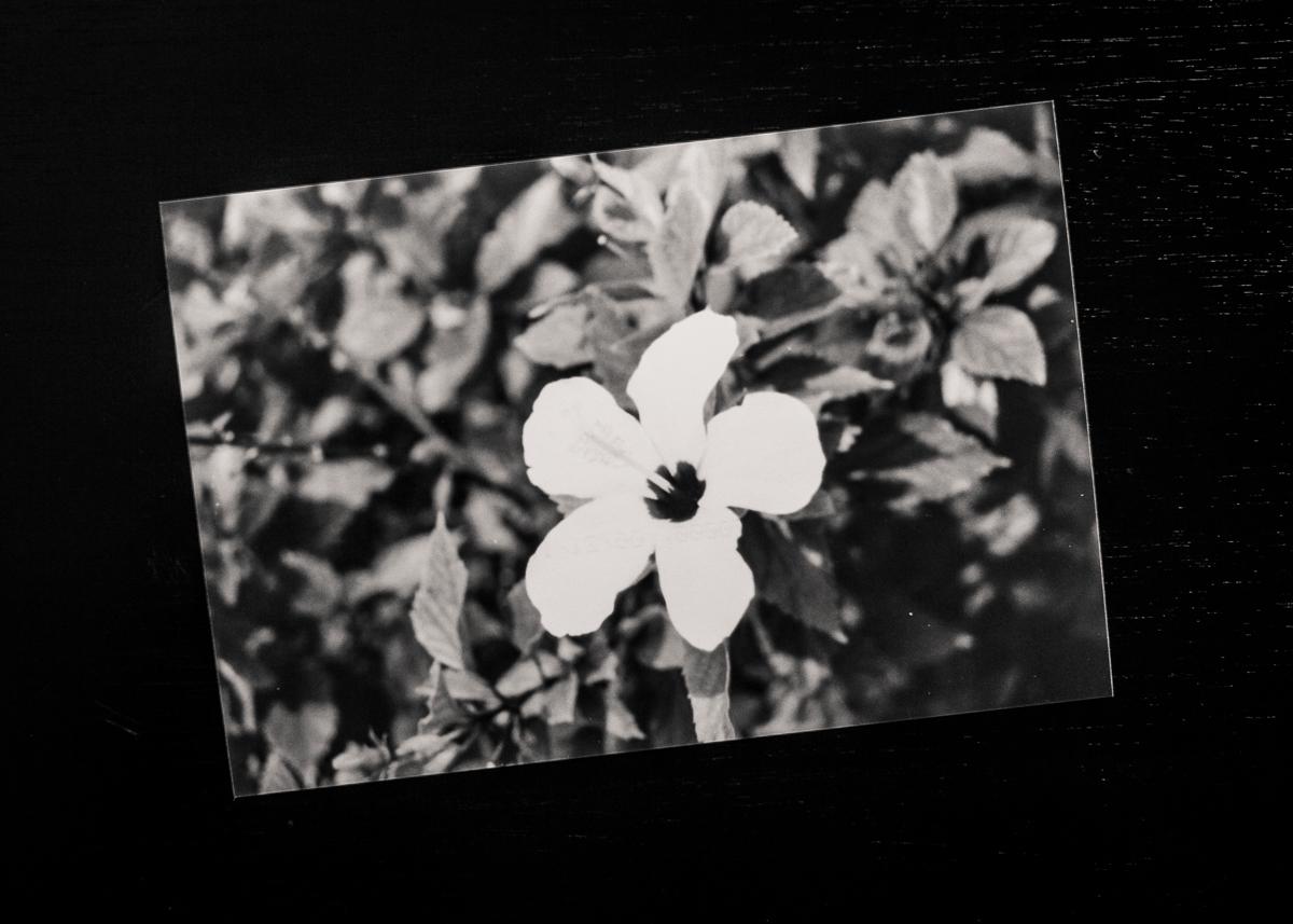 B&W Film Prints Time Capsule-1.jpg