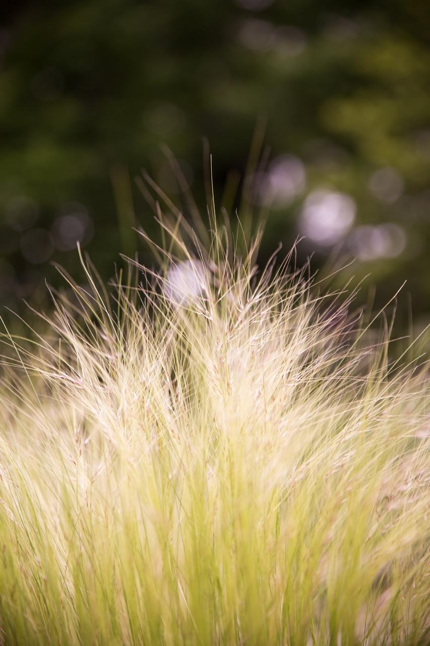 Chanticleer Garden • Main Line Photographer (6).jpg