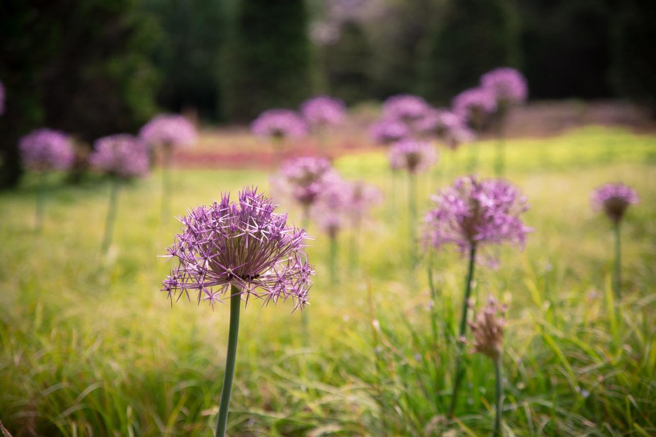 Chanticleer Garden • Main Line Photographer (3).jpg