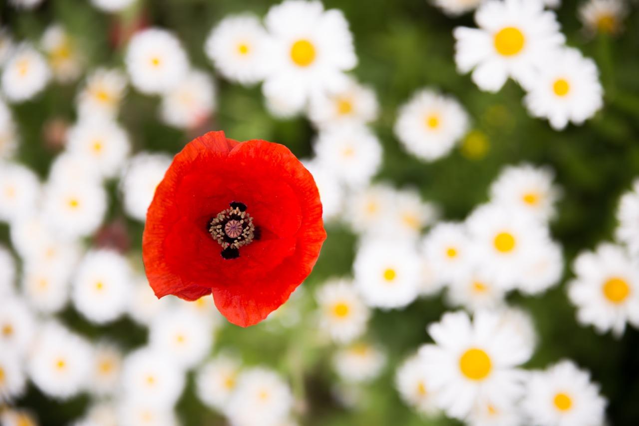 Chanticleer Garden • Main Line Photographer (4).jpg
