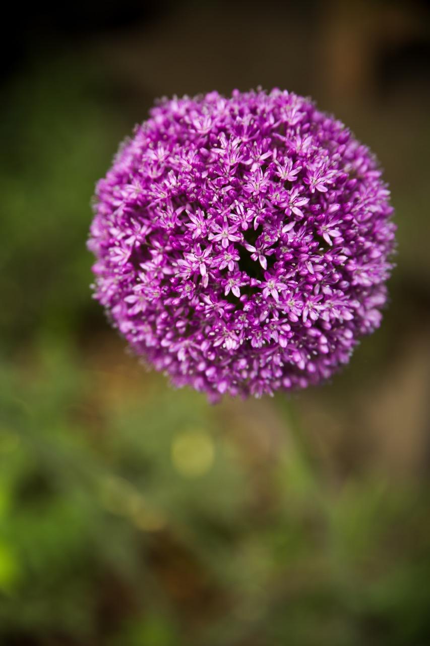 Chanticleer Garden • Main Line Photographer (8).jpg