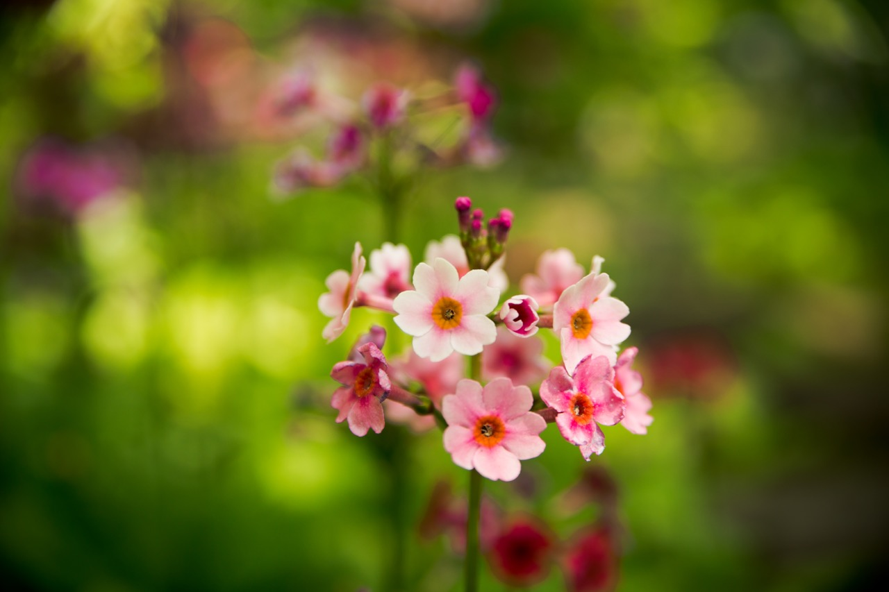 Chanticleer Garden • Main Line Photographer.jpg