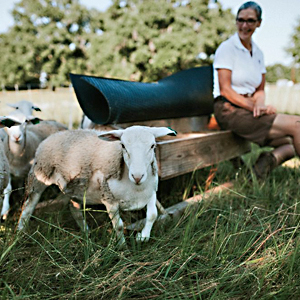 Senter Ranch   Christine Senter   Senter Ranch is a family operation selling pasture raised/grass fed lamb and eggs as naturally as possible, to help you and your family eat as healthy as possible and heal your body. She also has turkeys for the holidays!!