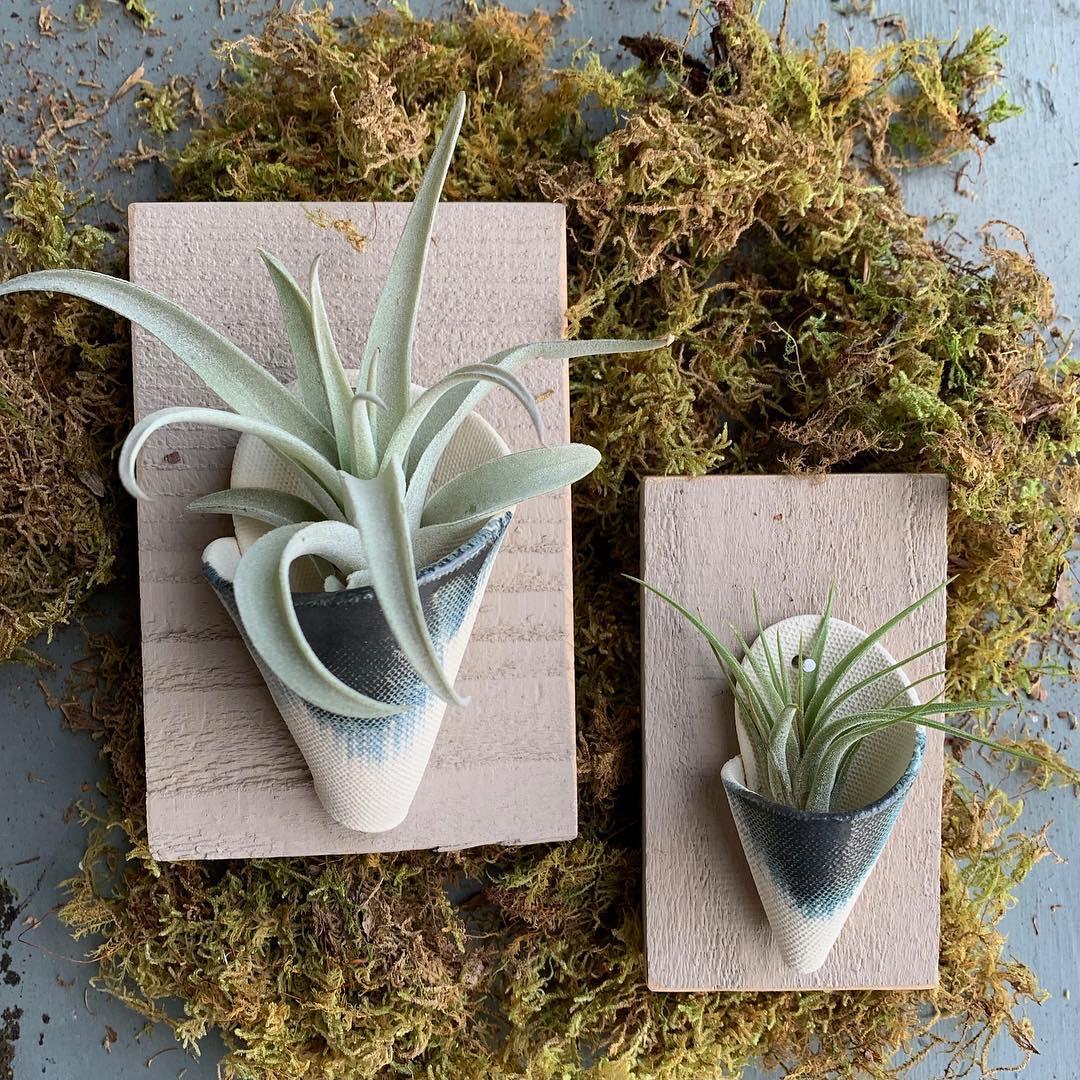 Indoor Plants - Root + Leaf