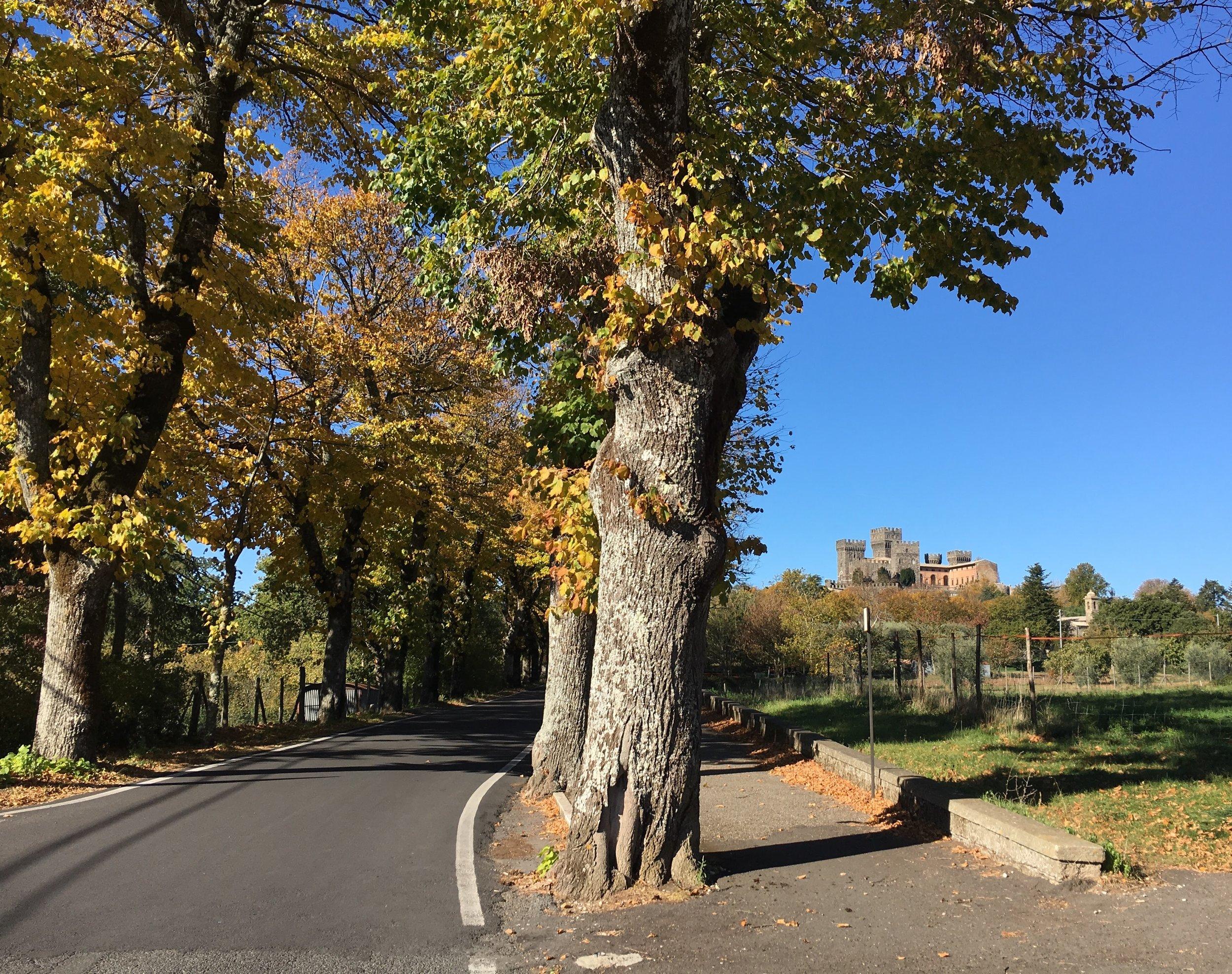 The road into Torre Alfina