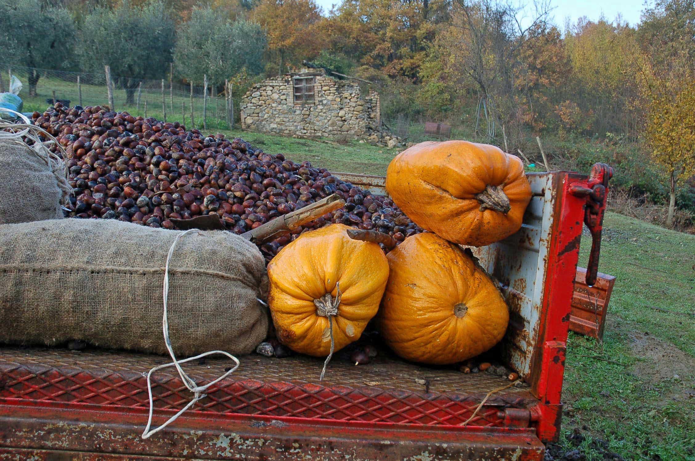 Chestnuts and pumpkins
