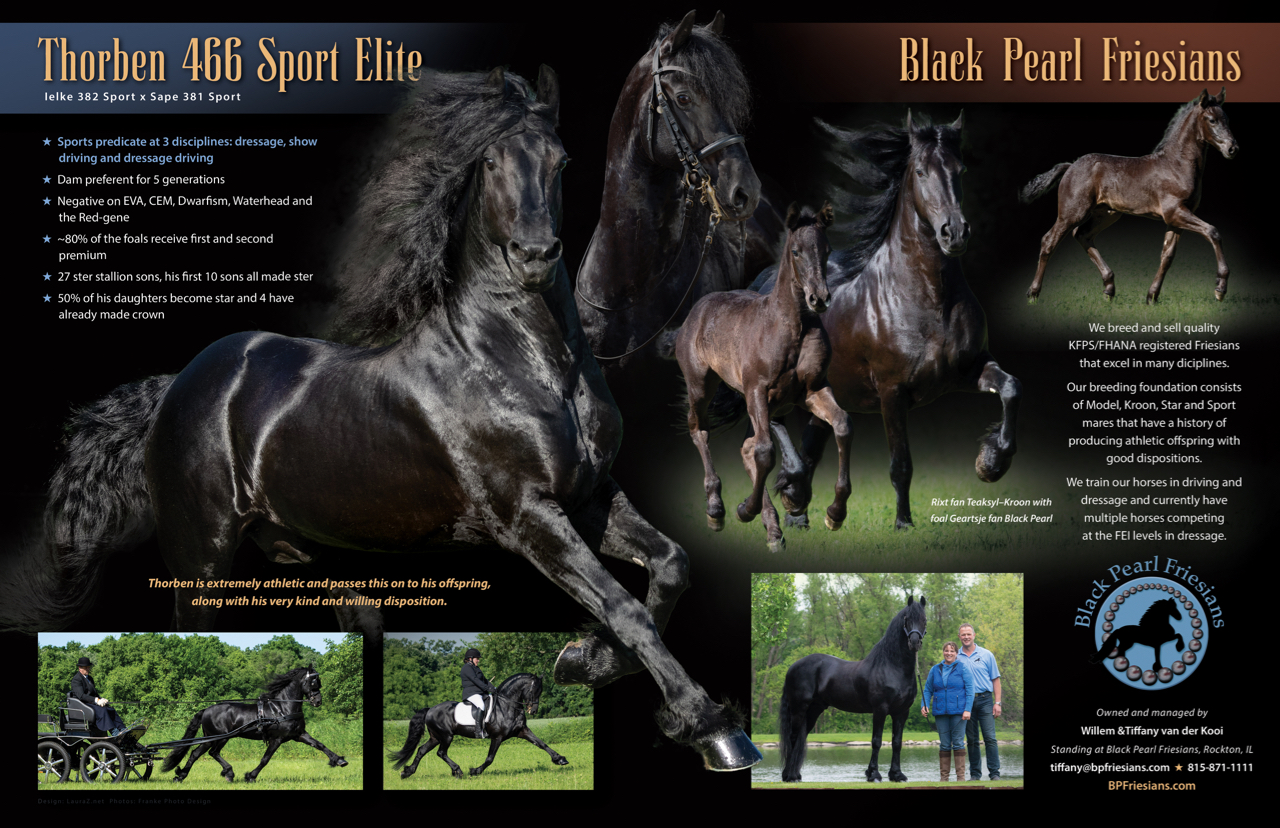 Black Pear Friesians CS2.jpg