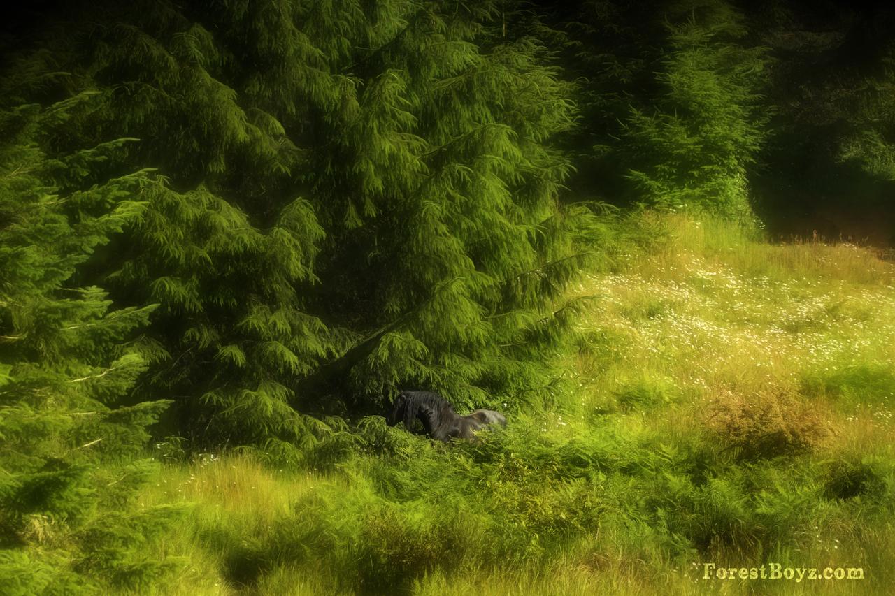 7DMK6735-Edit.jpg