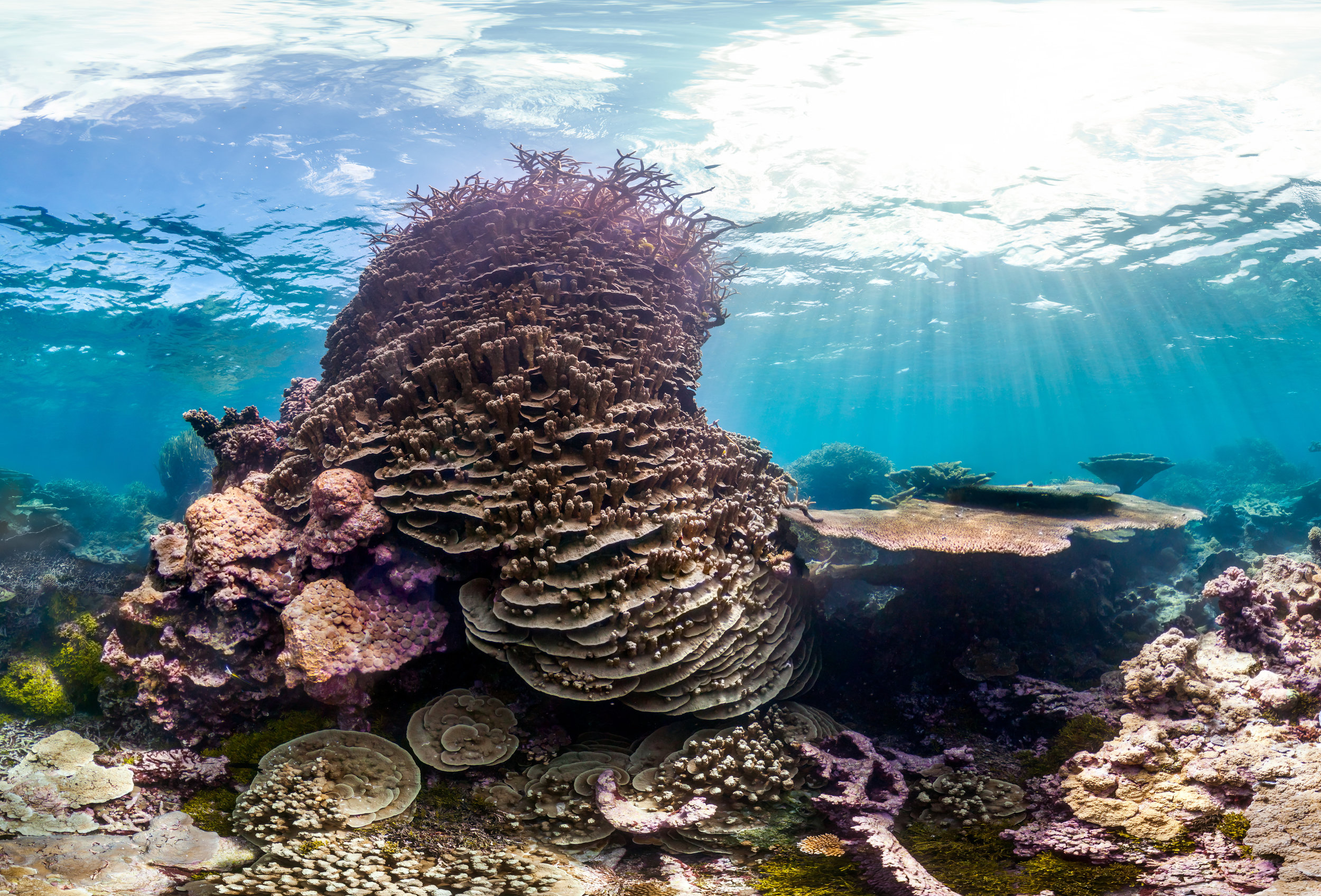 Palmyra_Atoll_ Crazy_Corals_©Underwater_Earth_Christophe_Bailhache