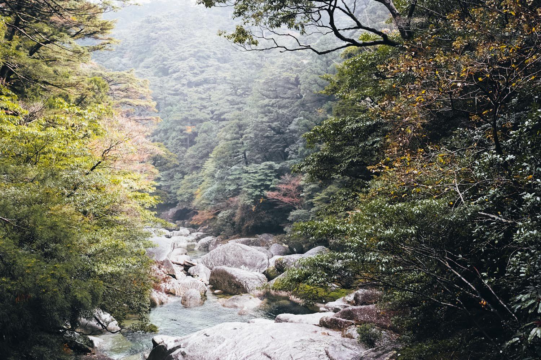yakusugiland_yakushima_japan_thevoyageur33-1500x1000.jpg