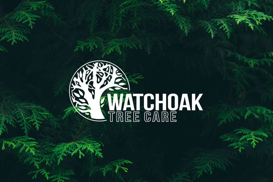 WATCHOAK TREE CARE - Logo and advertising for tree surgery company.The client asked for a more graphically pleasing version of the 'usual' tree maintenence businesses, but I had to still adhere to traditional conventions of this kind of company so as not to alienate some of their core audience market.The shape of the tree was taken directly from a site specific local oak that the client had requested.
