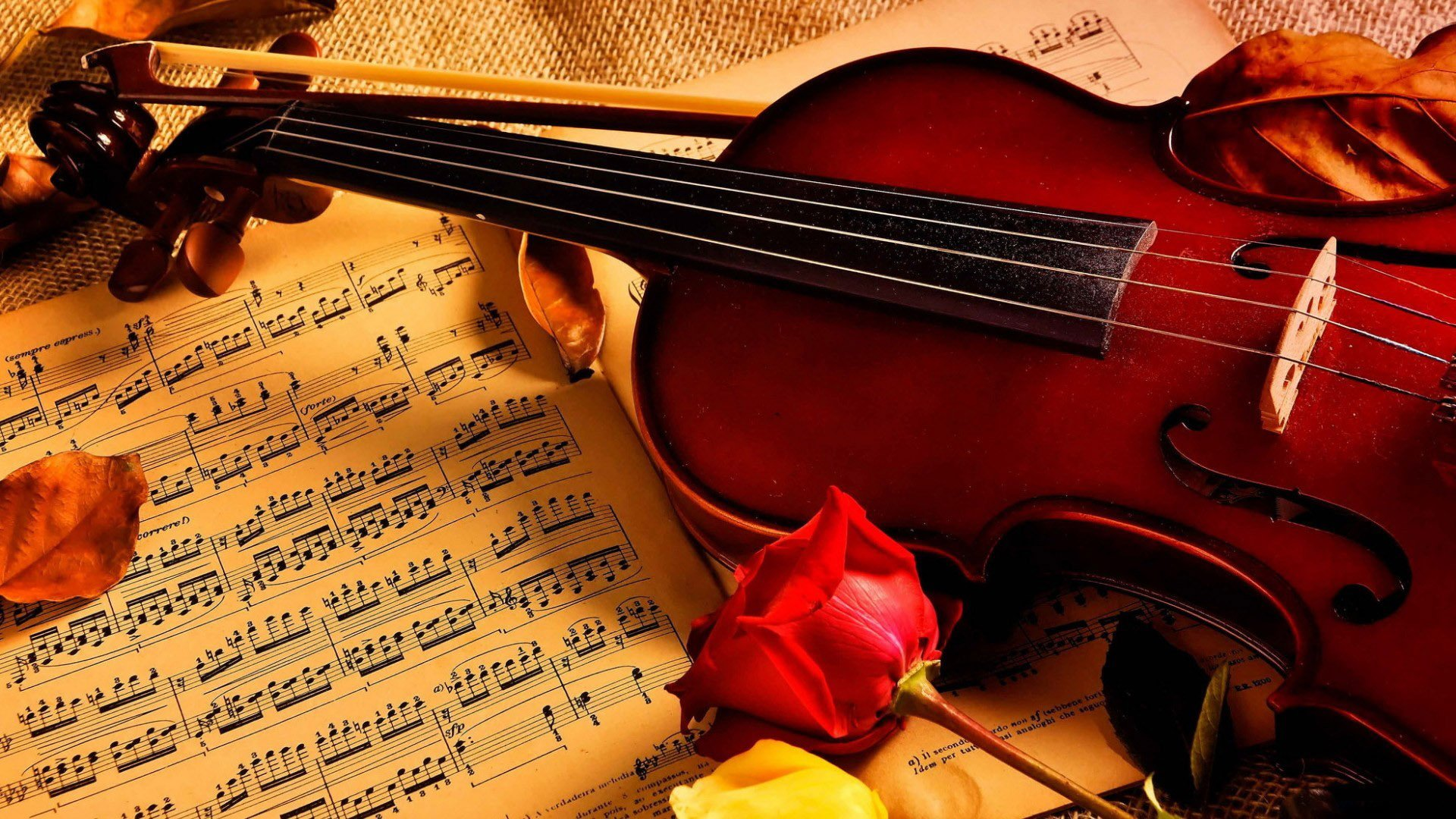 63691711-violin-wallpapers.jpg