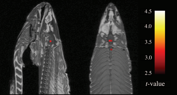 Bennett et al.  The dead salmon study.  [4]