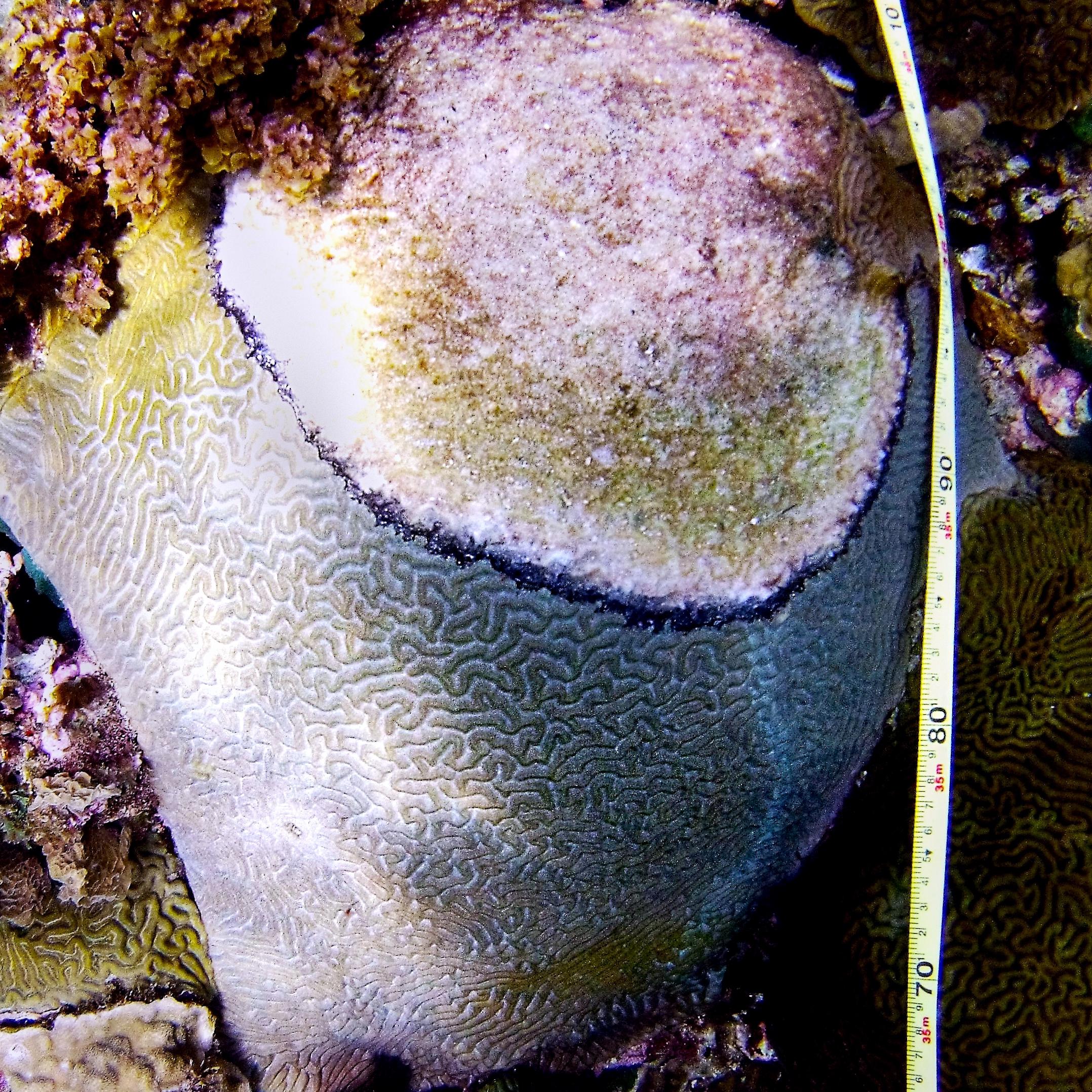 coral health & disease in bocas del toro, panama -