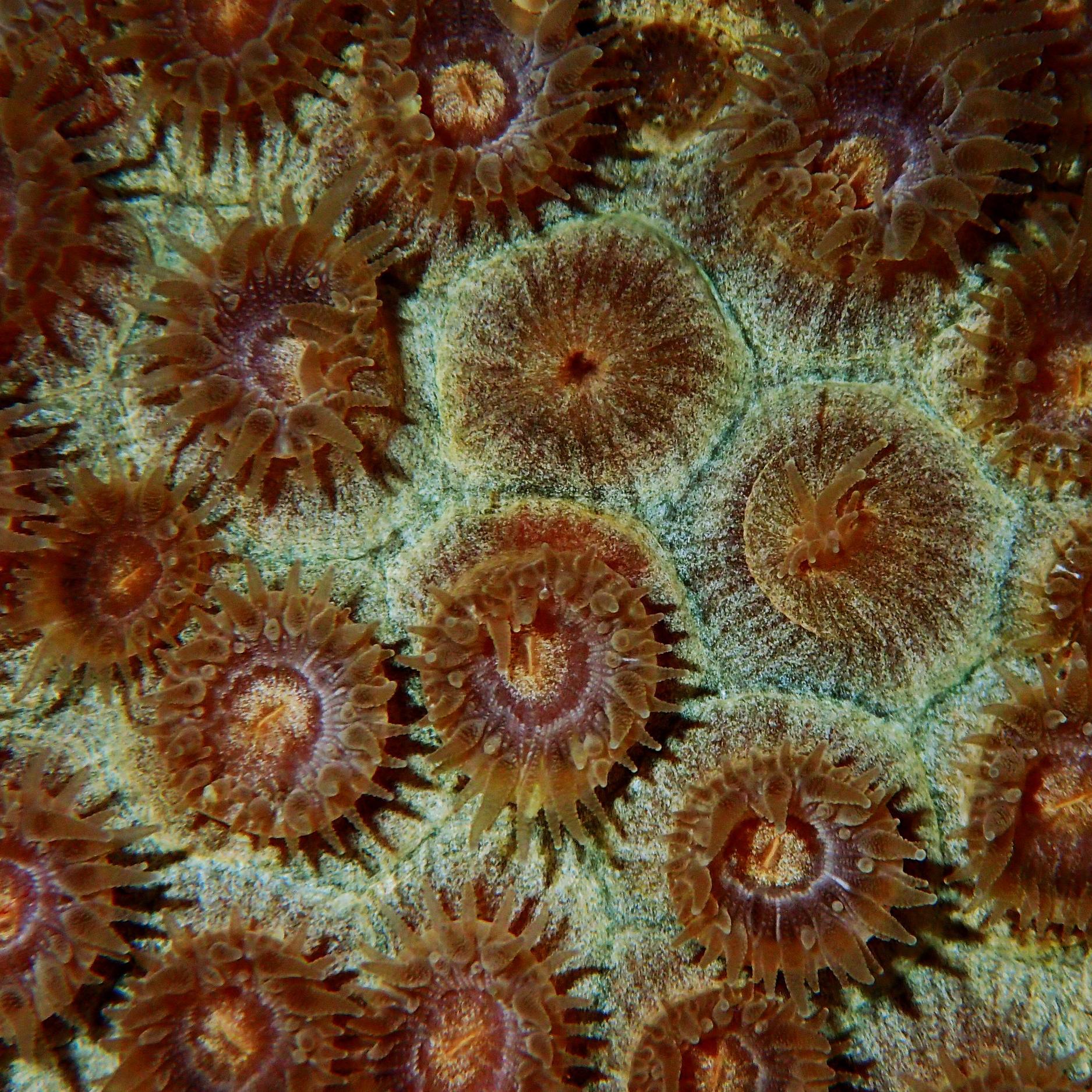 corals up close -