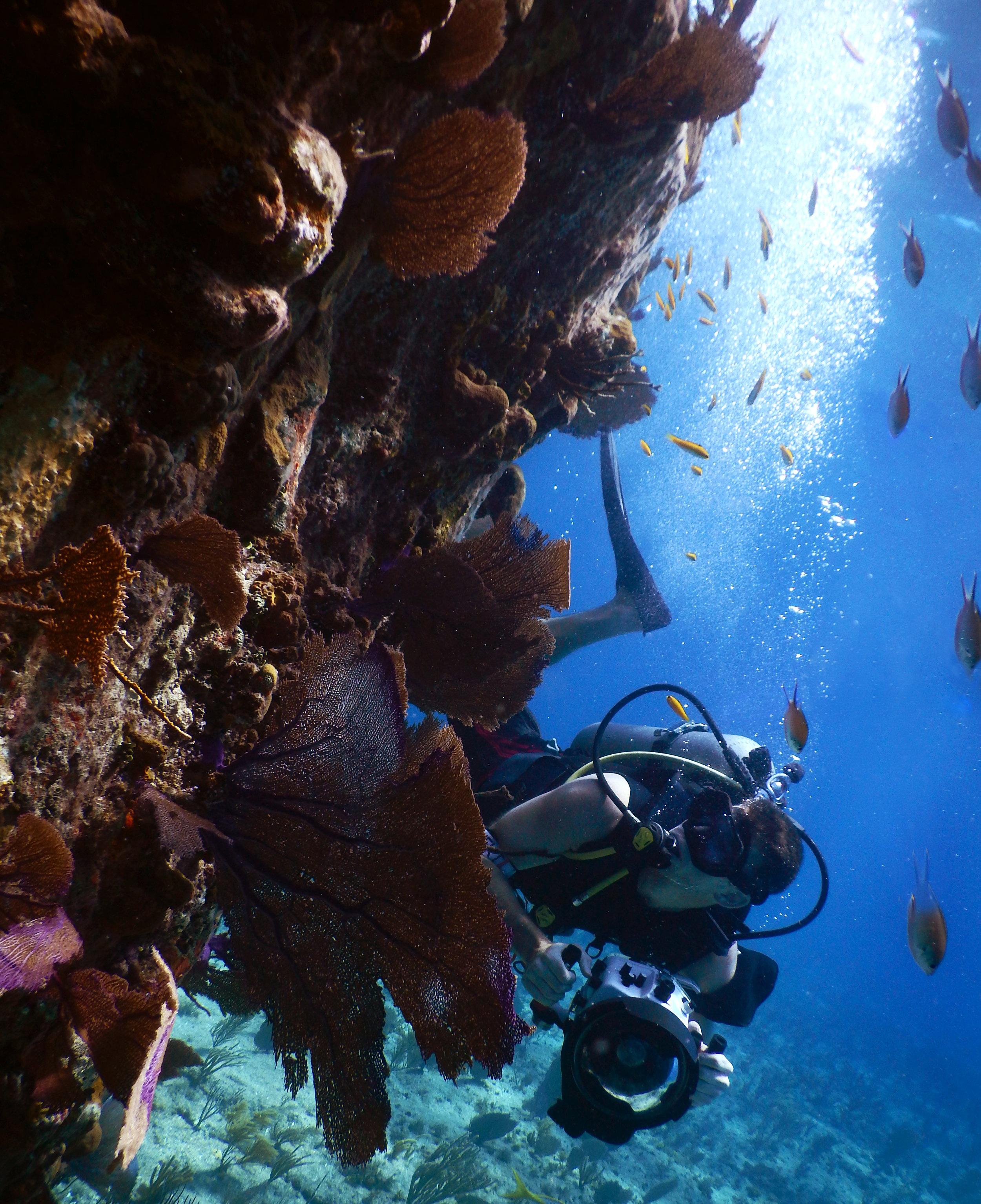 Photographer Josh Liberman checks out the marine life off the coast of Nassau.