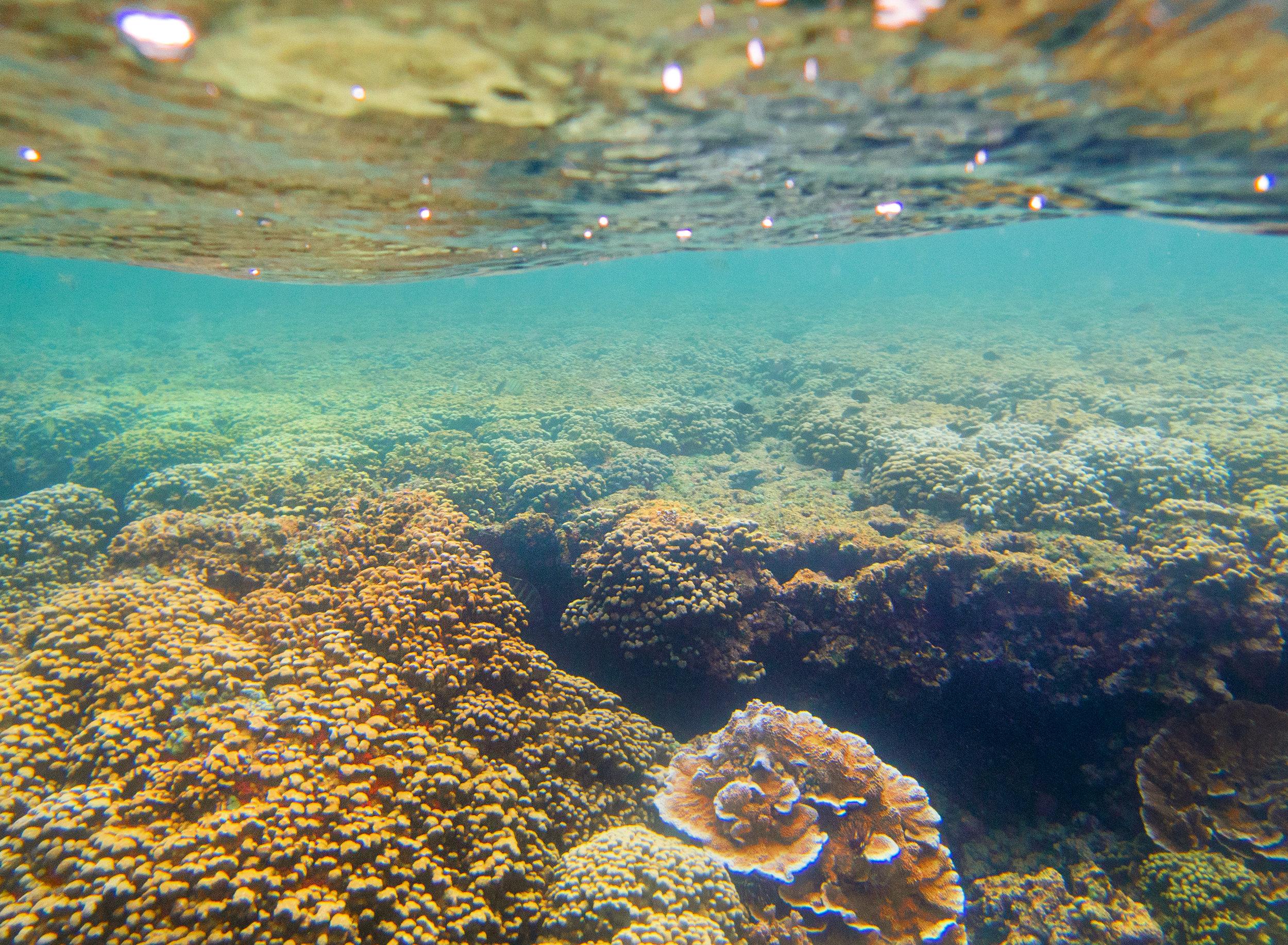 reefscene3.jpg