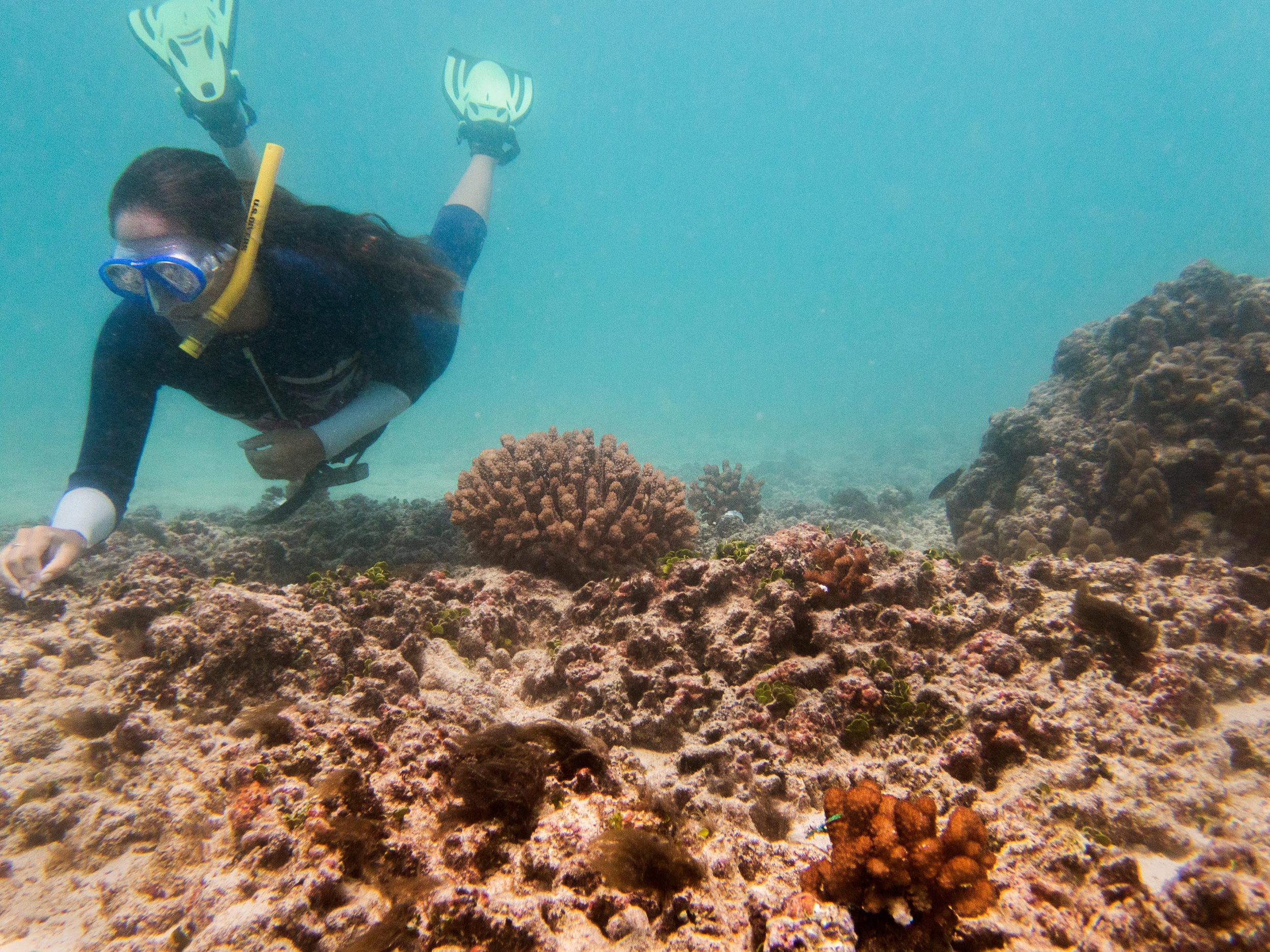 mari_snorkeling.jpg