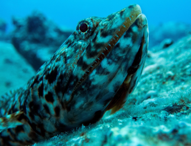 lizardfish2.jpg