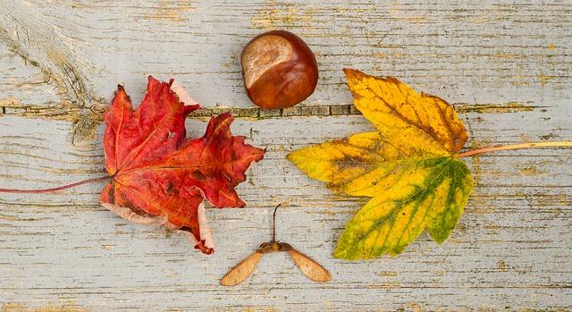 fall-970336_640.jpg