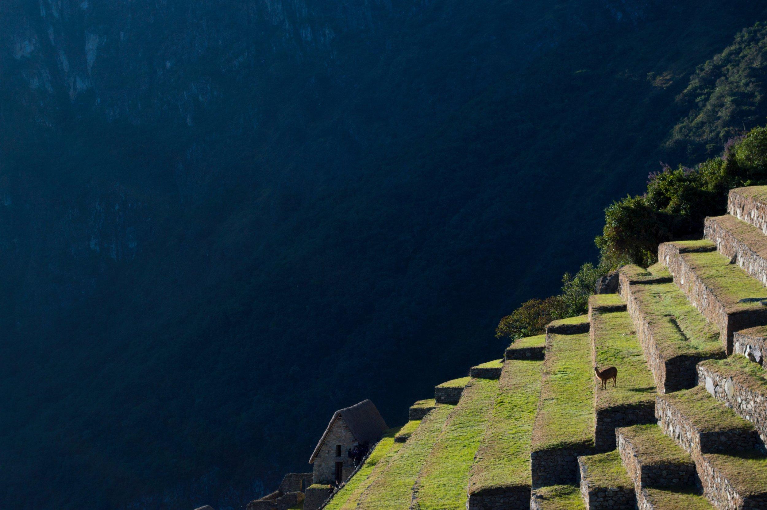 steps-at-machu-pichu-photo