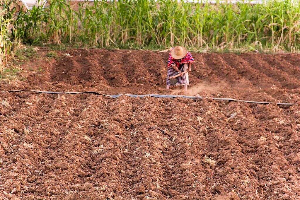 Hard_work_in_the_fields.jpg
