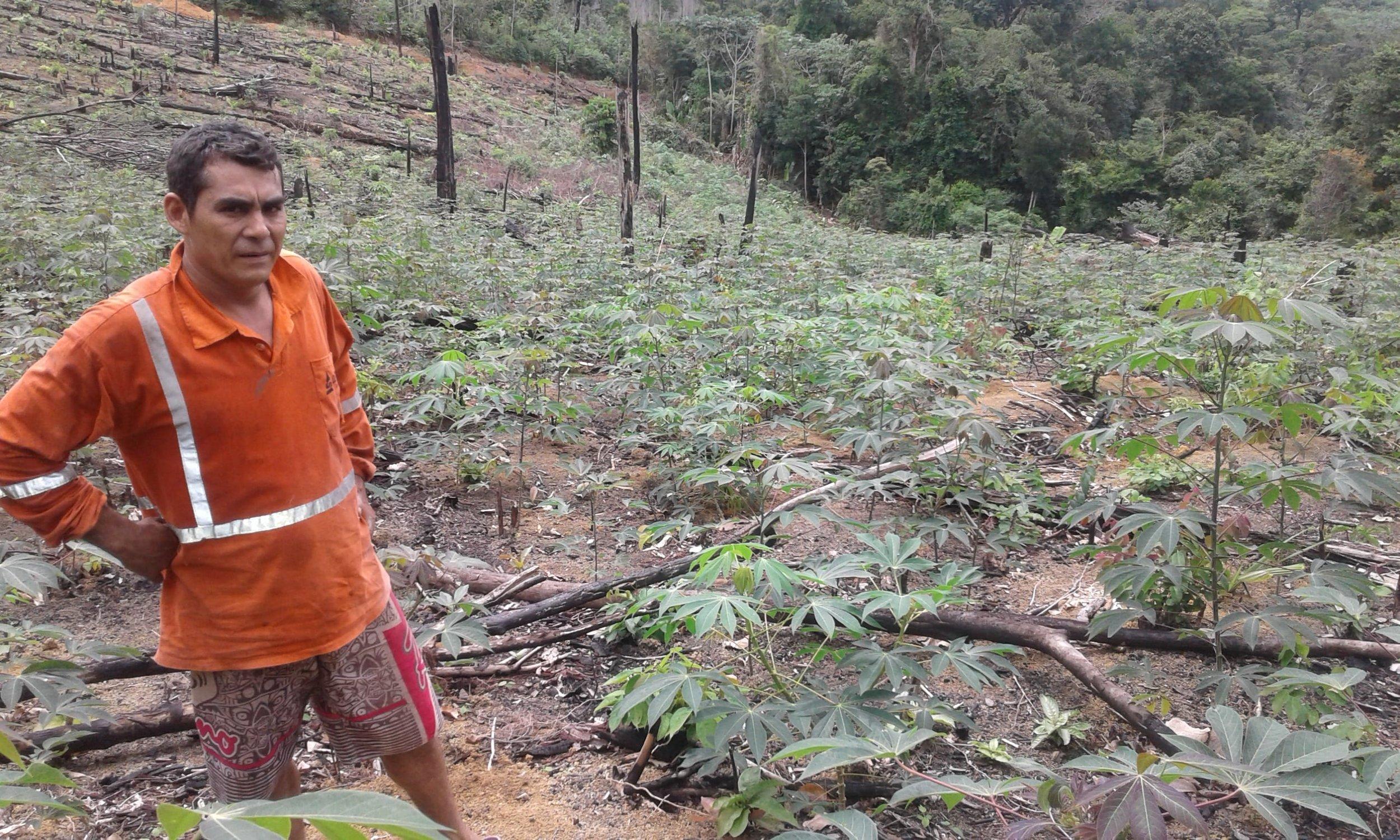 Agricultor Isaac com seu plantio recém adubado para plantio do guaraná.jpg