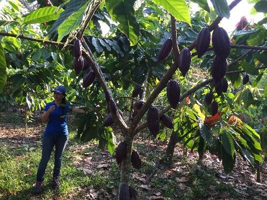 Business-Strenghtening-Honduras-01.jpg
