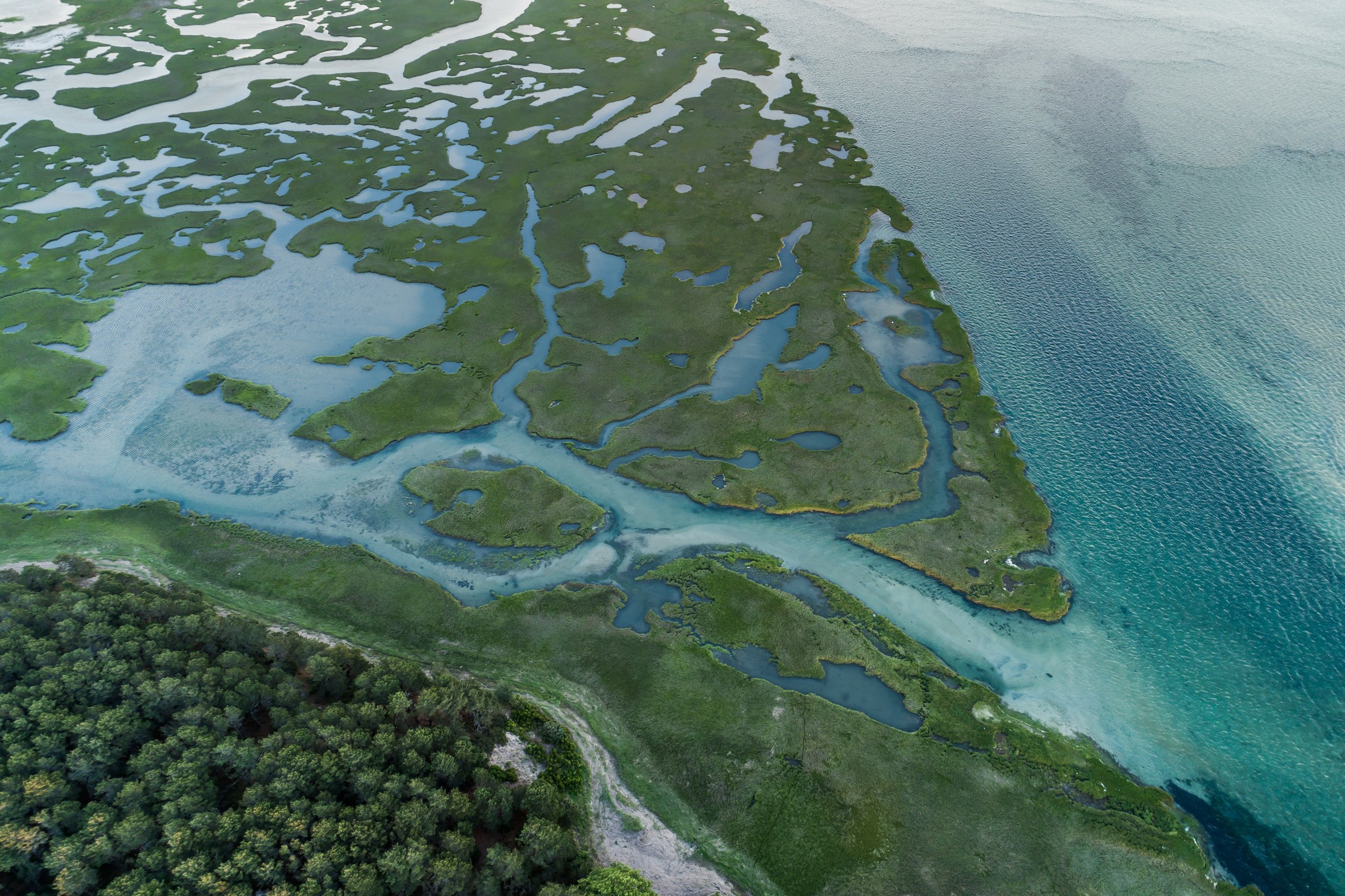 MA_wetlands.jpg