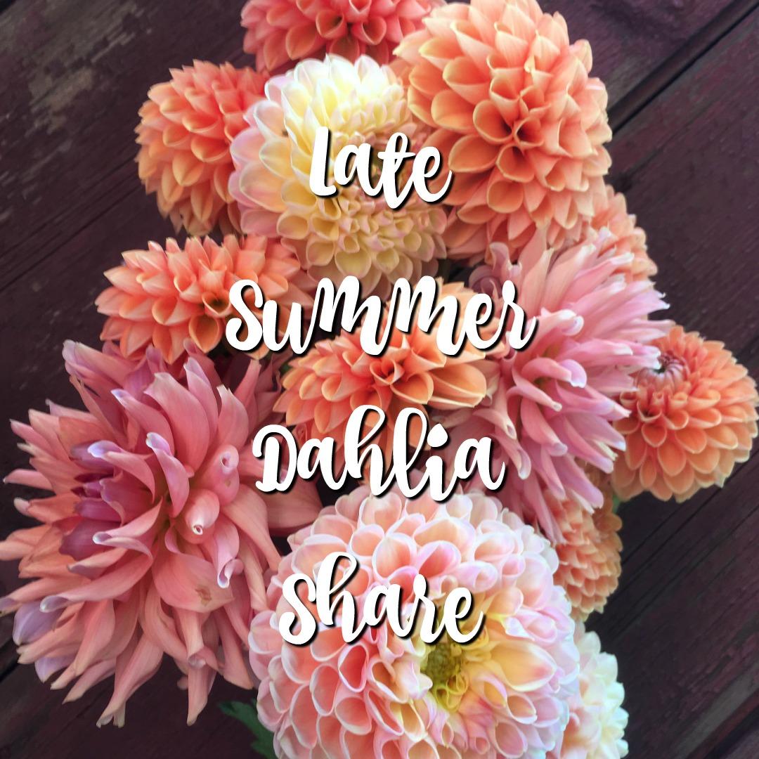Late Summer Dahlia Share - no copy.jpg